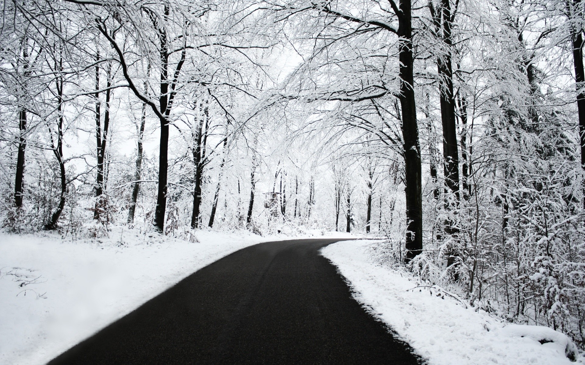 nice view of winter photo