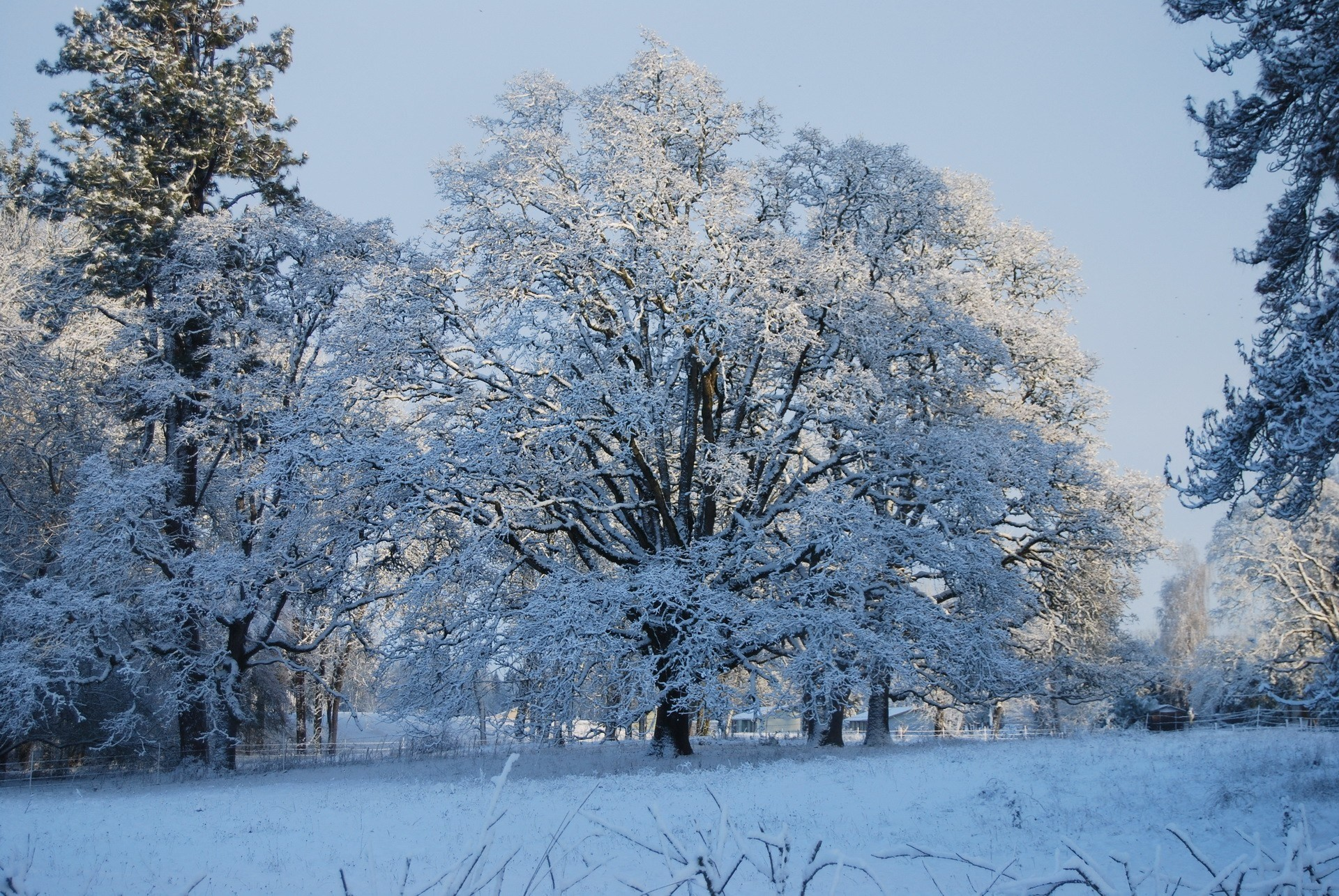 winter background wallpaper free – winter category