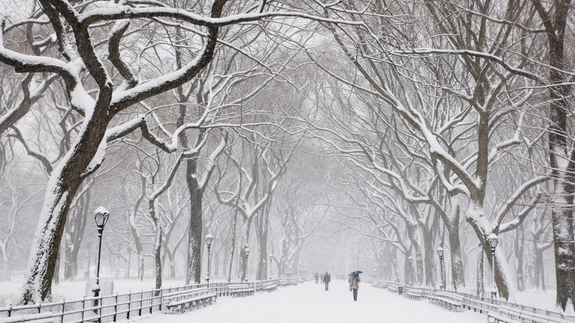 Beautiful Snow, scenes, HD Wallpaper and FREE Stock Photo