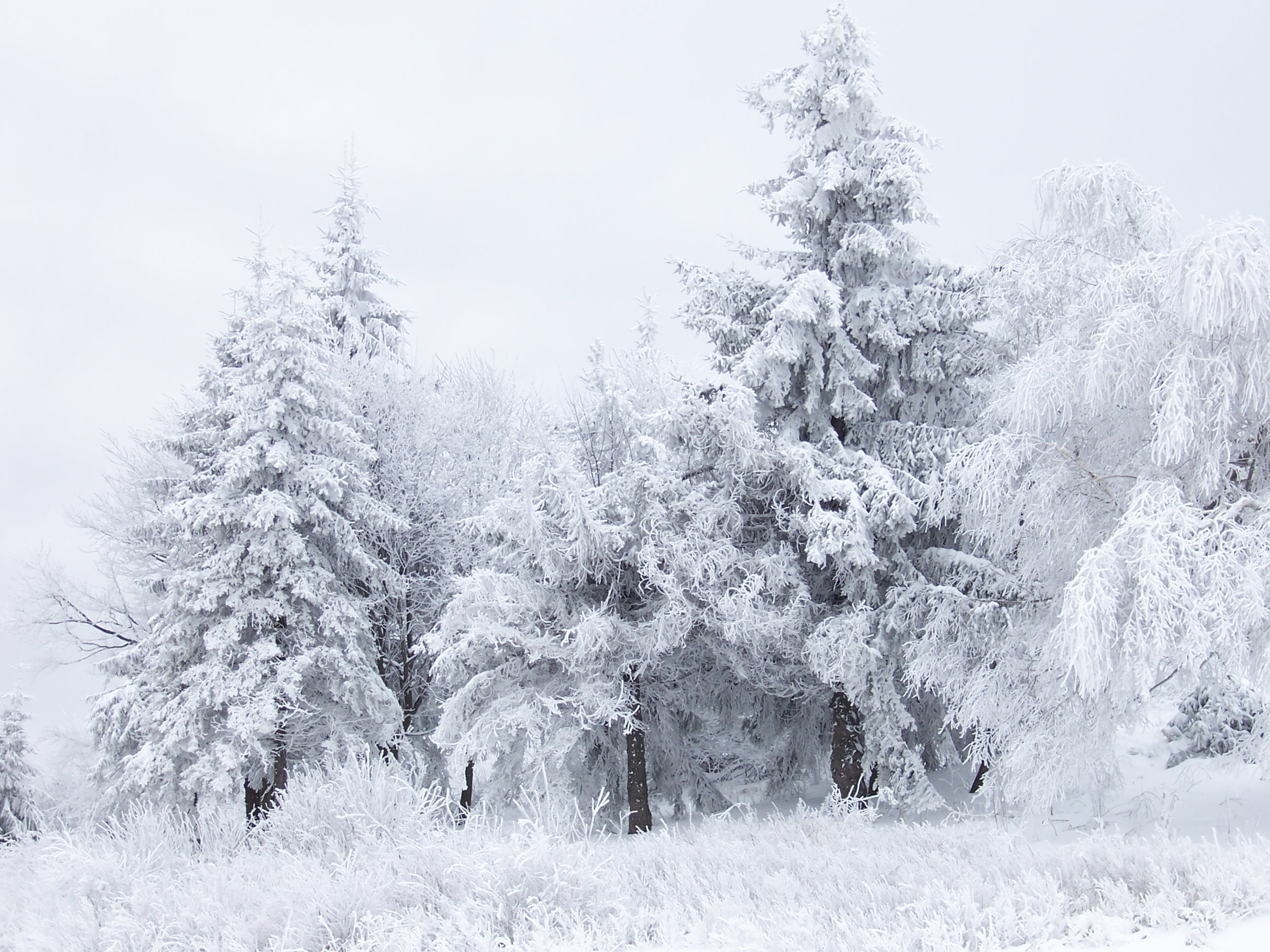 15 best let it snow images on Pinterest   Snow scenes, Winter scenes and  Winter snow
