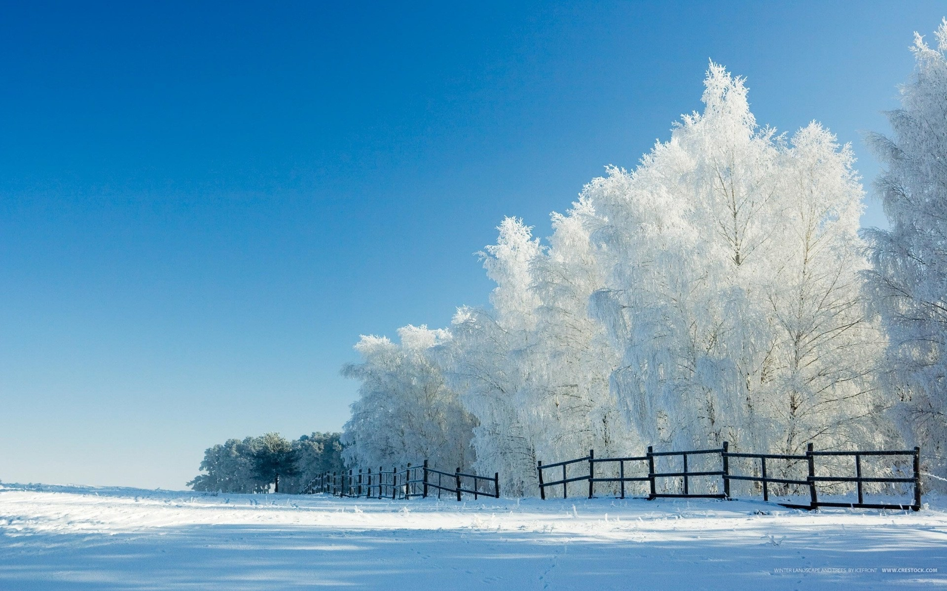 Snow Scene 1920×1200 Wallpaper
