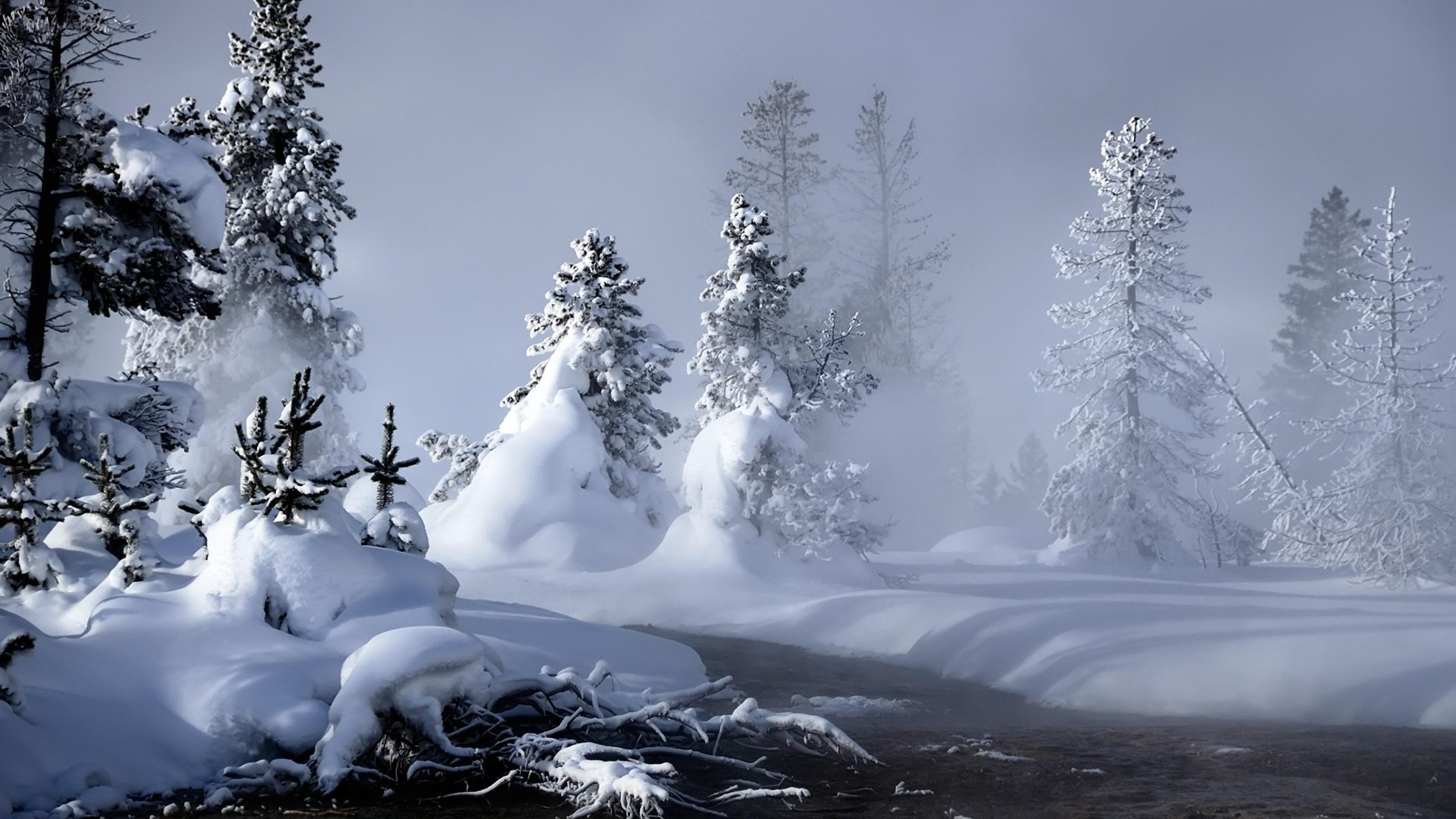 Wallpaper snow, water, fog, steam, fir-trees, trees,