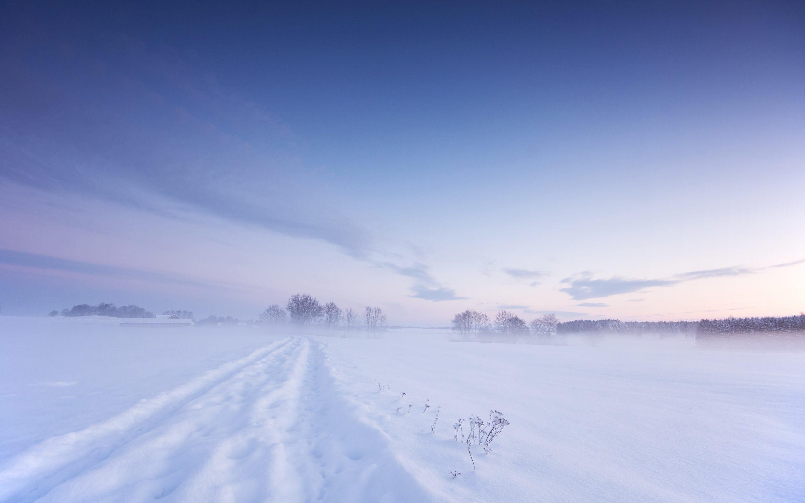 Winter Snow Background Wallpaper