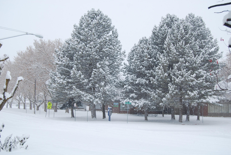 … holiday, freeze, season, snowflake, snowfall, blizzard, december, xmas,  freezing, snow white, christmas snow, winter background, snow background,  …
