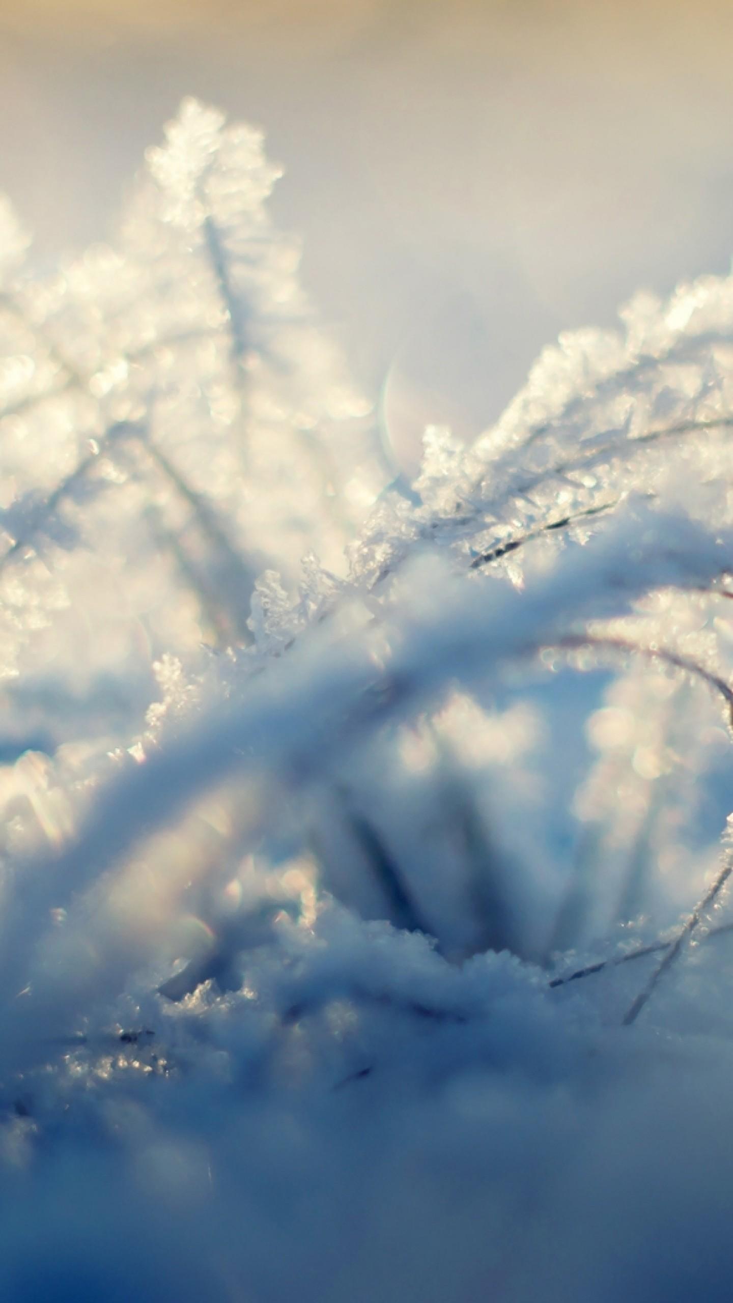Wallpaper snow, background, shine, winter, grass