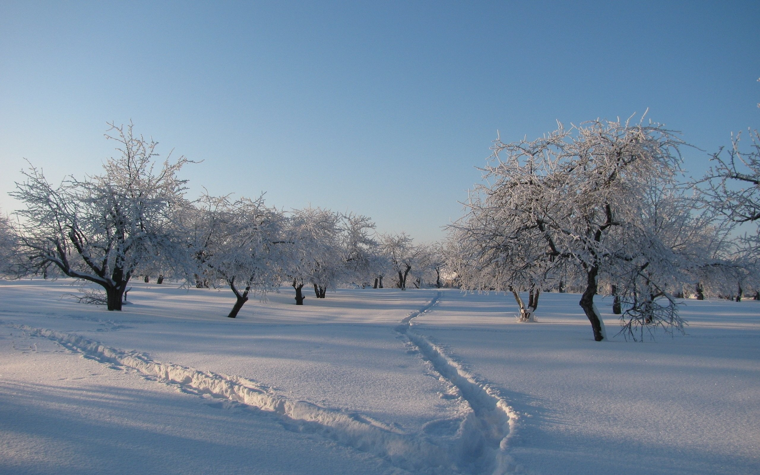 Winter Trees Hair Shadows Snowdrifts Freshness Cover Garden Tracks Traces Snow  Background Image …