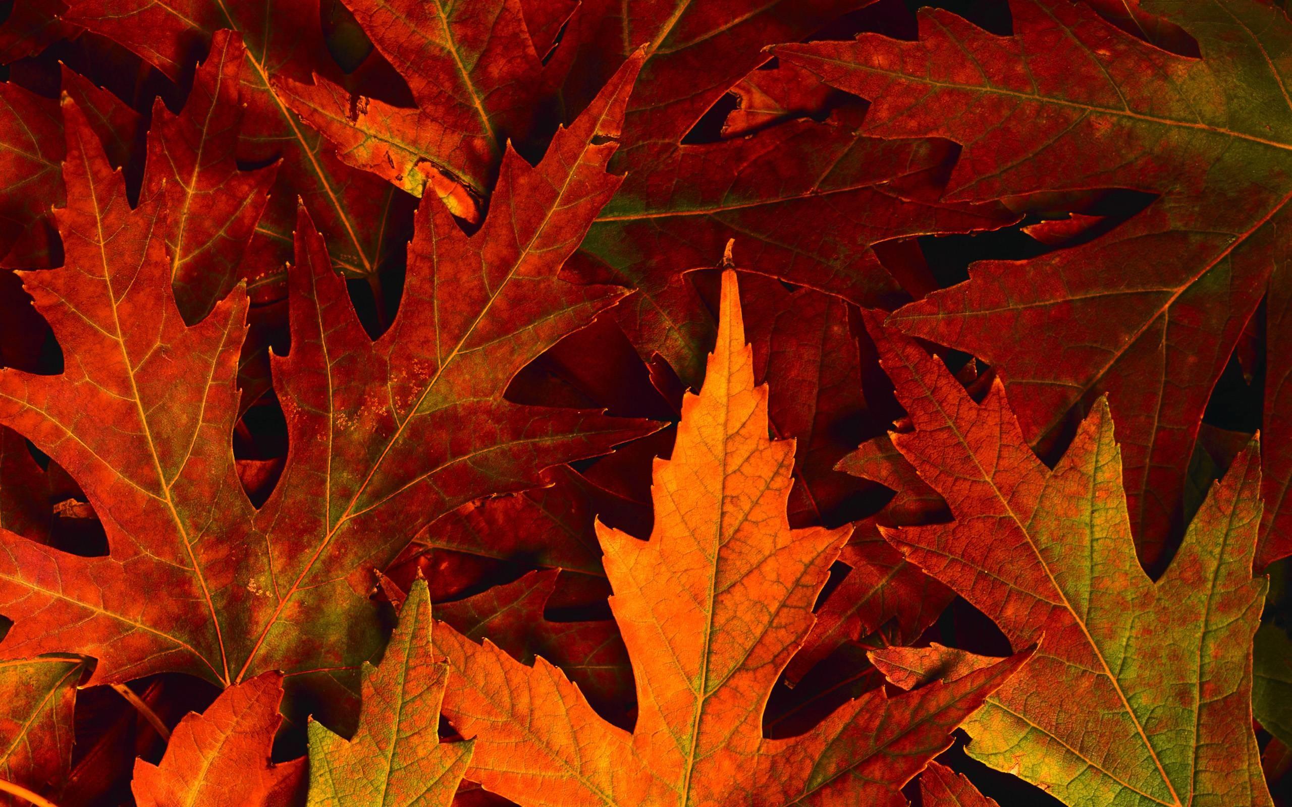 Free HD Fall Wallpapers For Desktop.