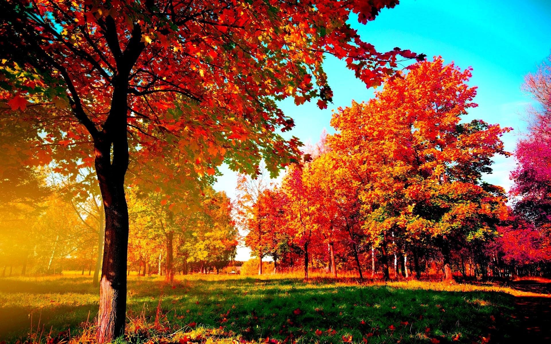 Autumn-trees Wide Desktop Background
