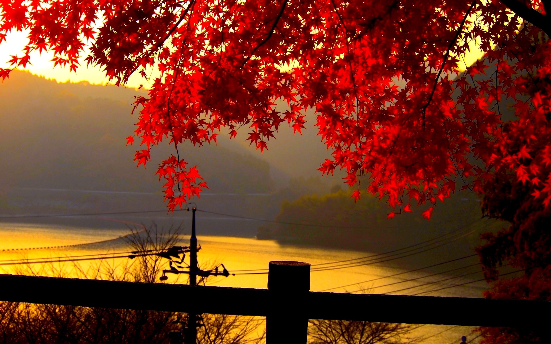 Beautiful autumn leaves pictures for desktop.