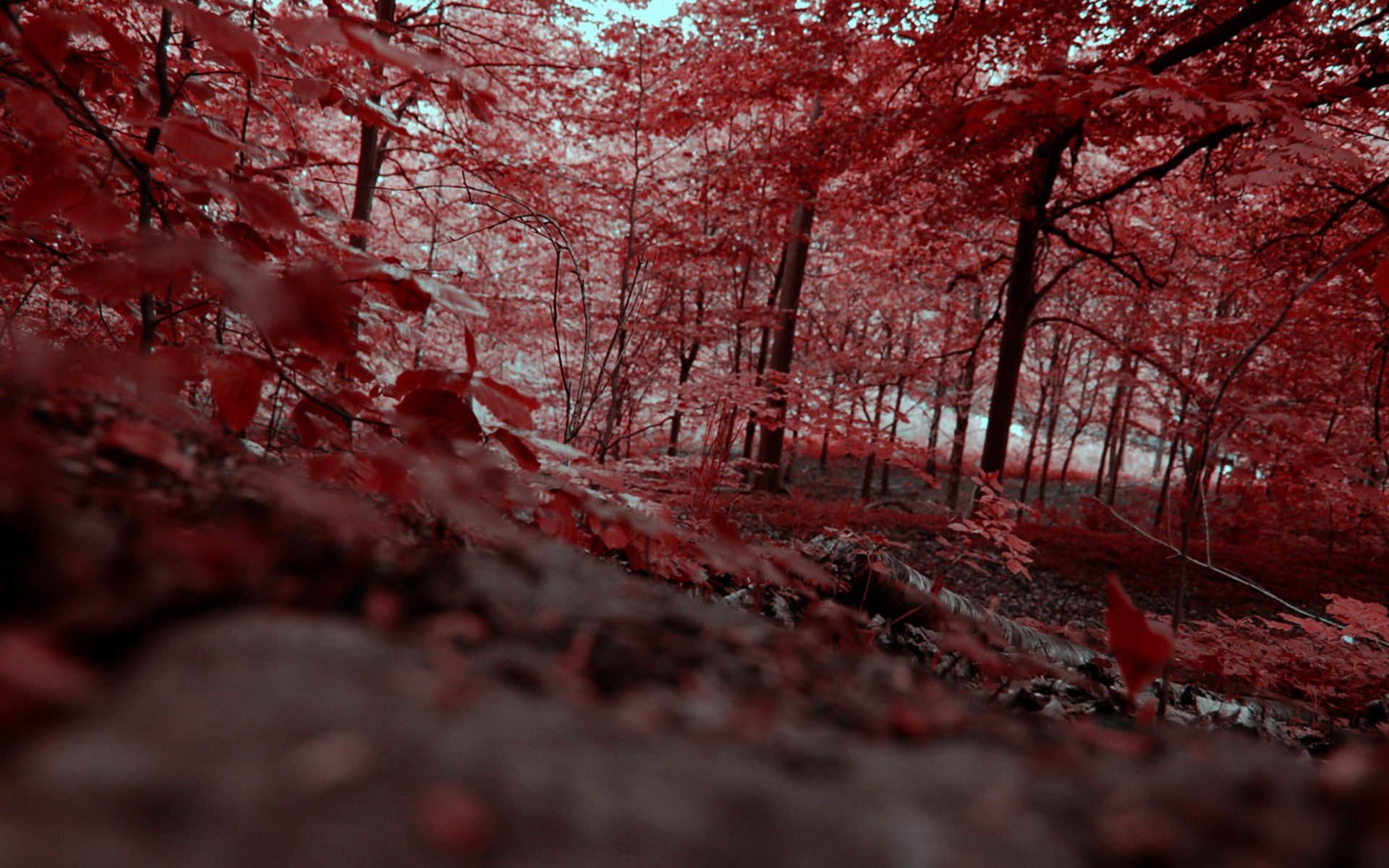 Autumn Scene wallpapers (44)