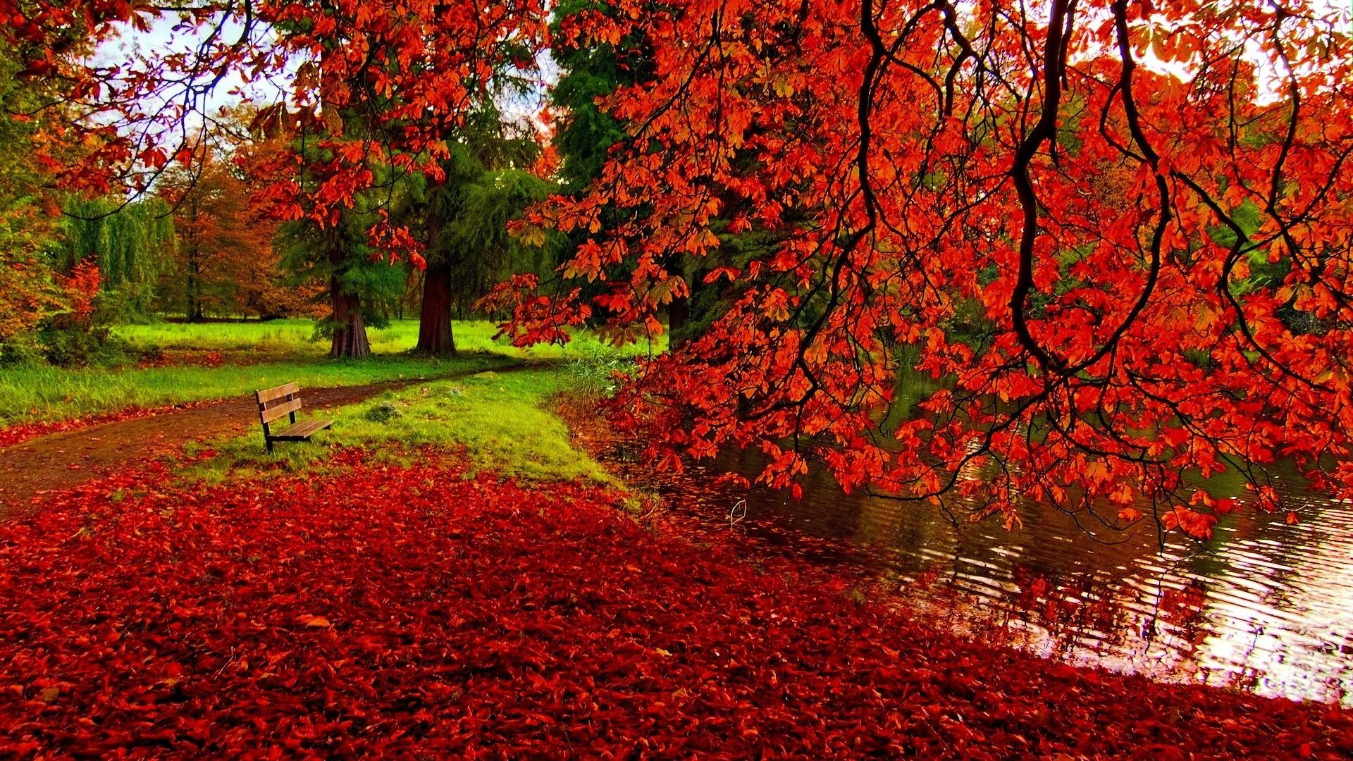 Fall Leaves Desktop Wallpaper Fall Leaves Wallpaper Backgrounds Fall #8191