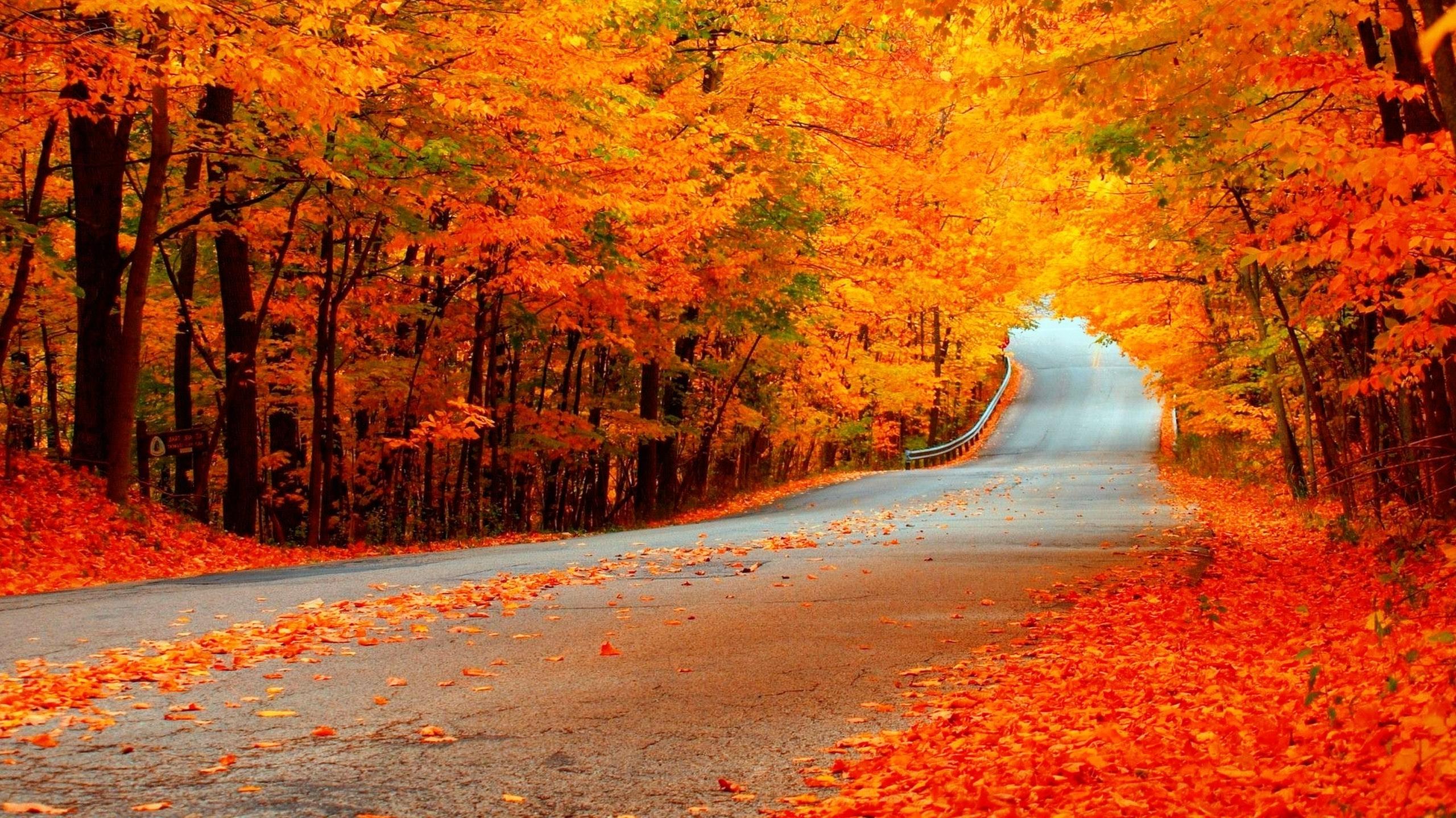 Fall wallpaper desktop