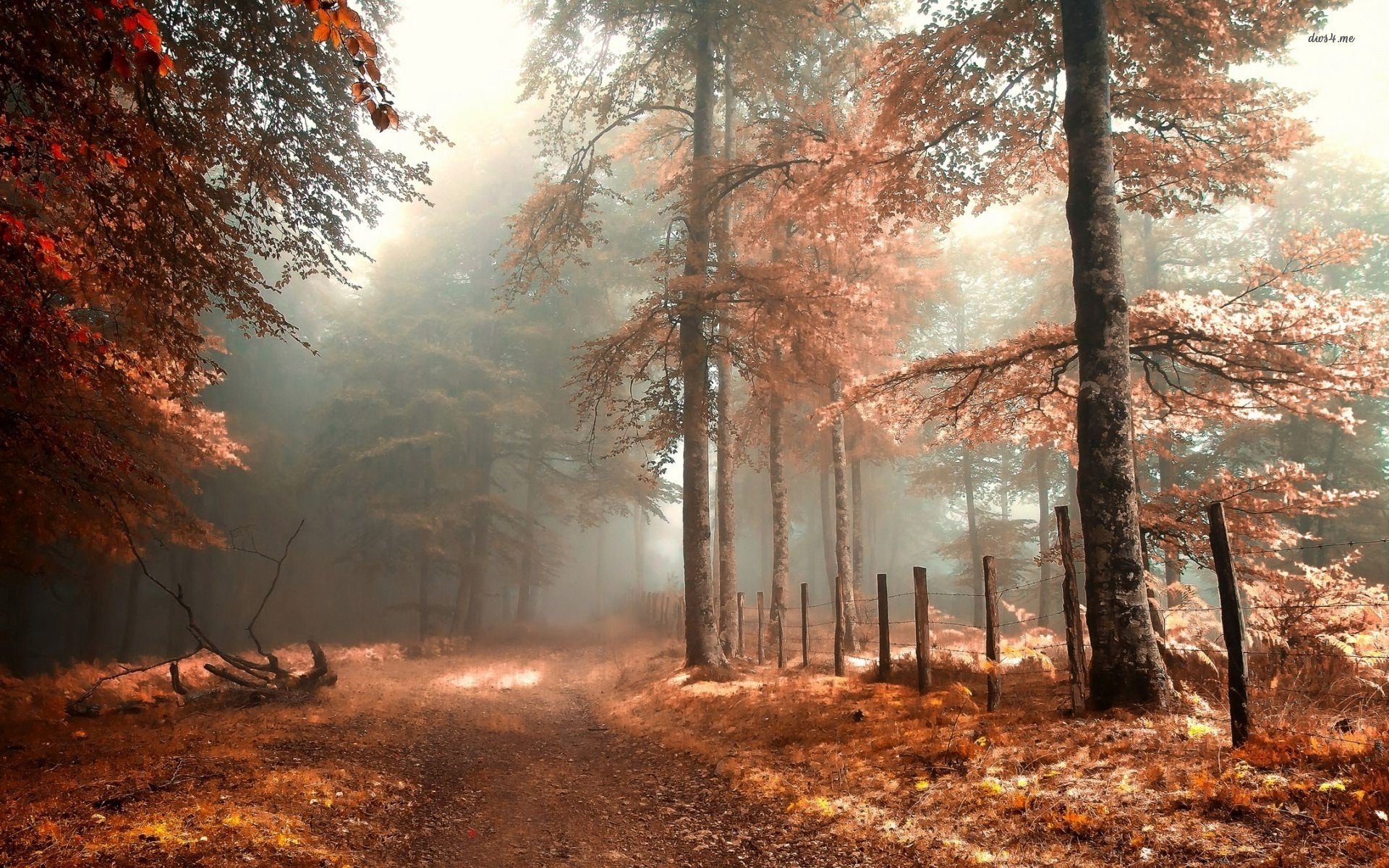 Foggy autumn forest nature wallpaper.