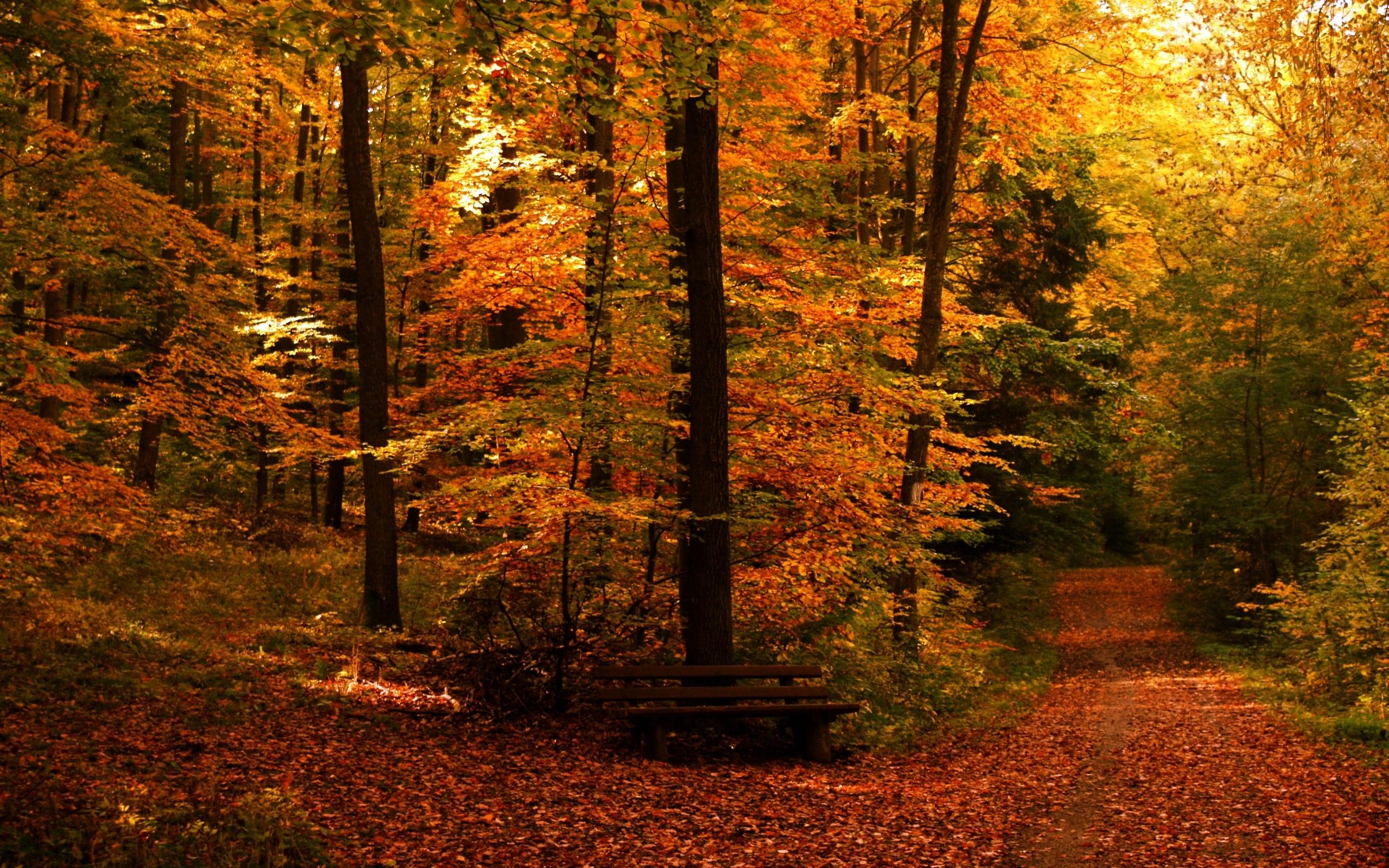 … fall wallpapers free wallpapersafari; fall themed desktop …