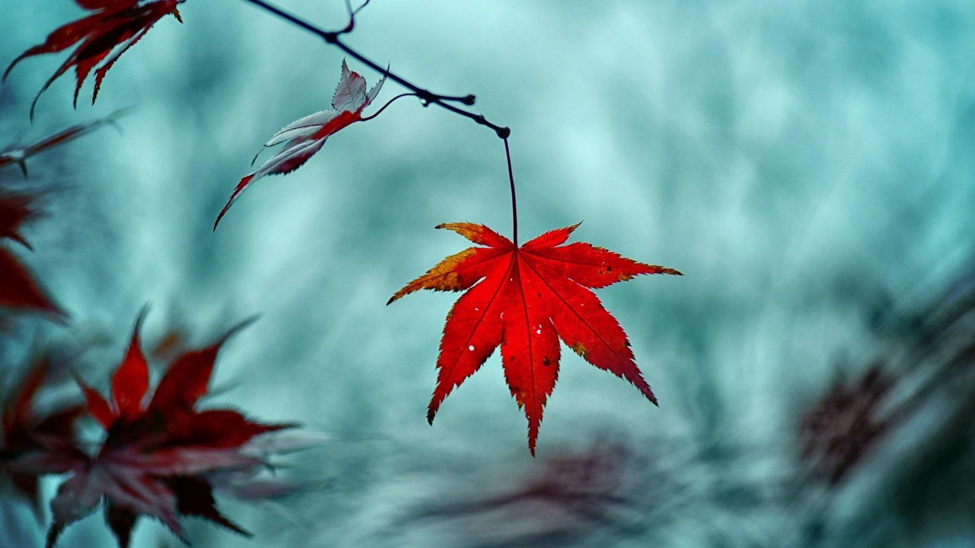 Autumn Leave Nature Fall Desktop Backgrounds – 1920×1200