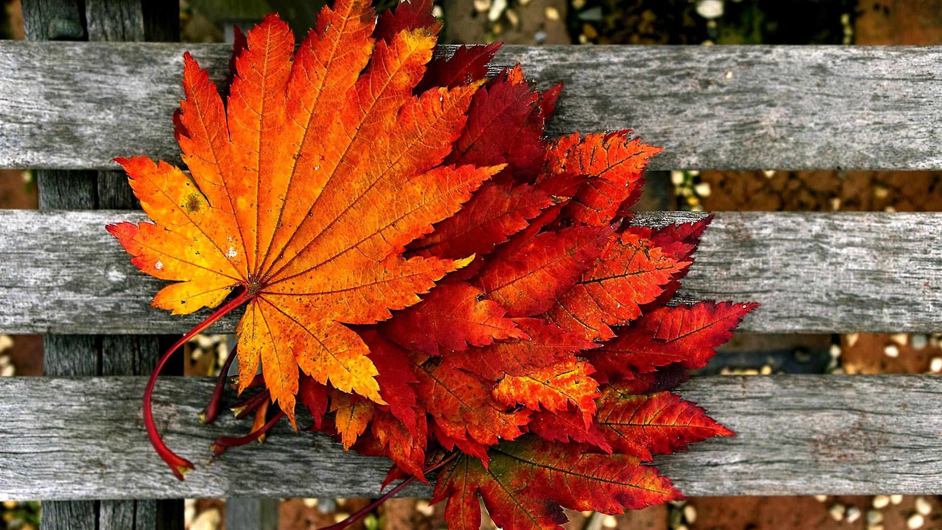 Autumn wallpaper HD free download.