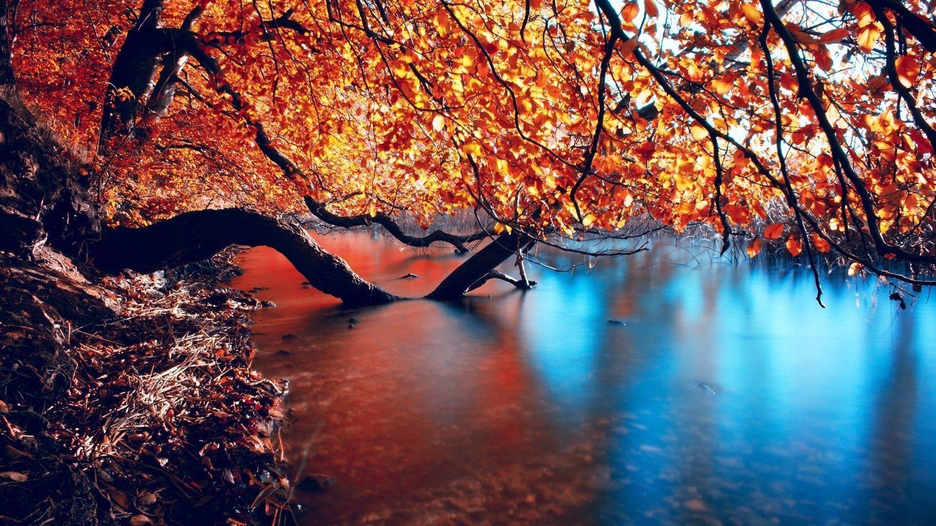 Stunning HD Autumn. Â«