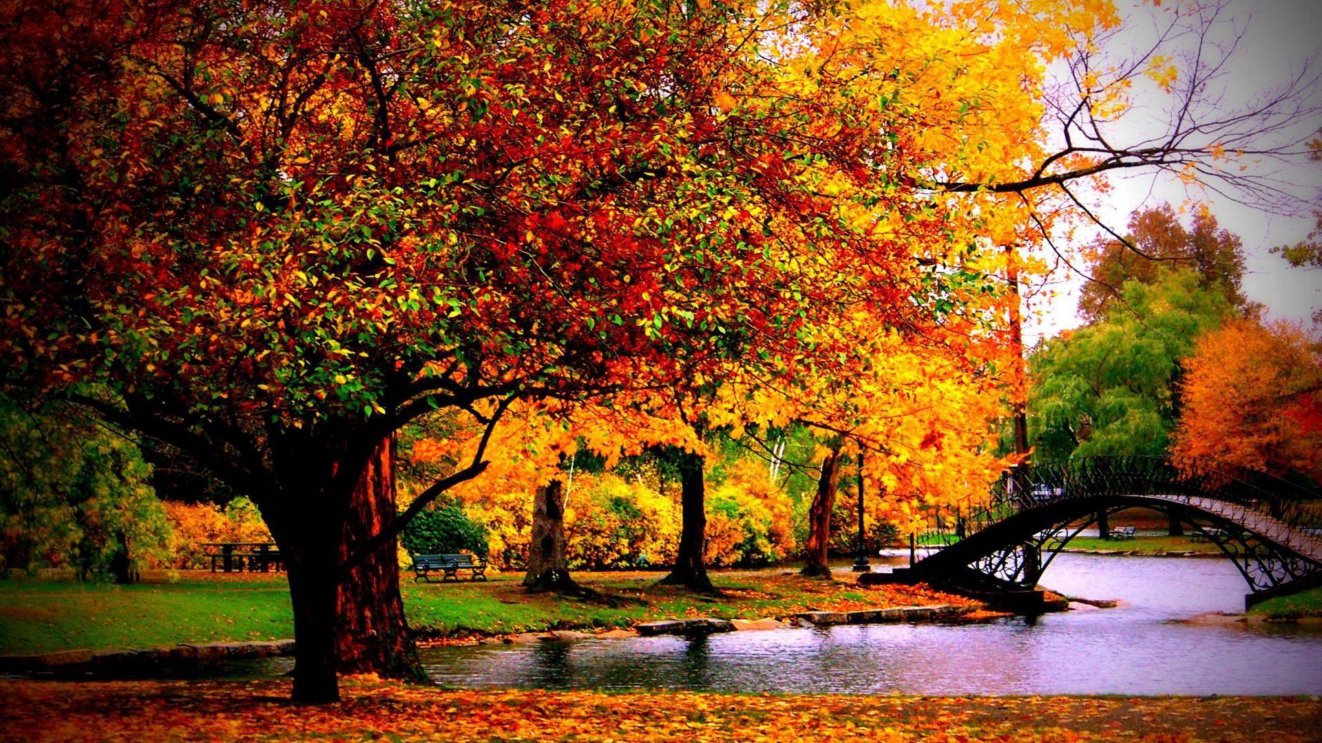 Autumn Desktop wallpapers (33 Wallpapers)