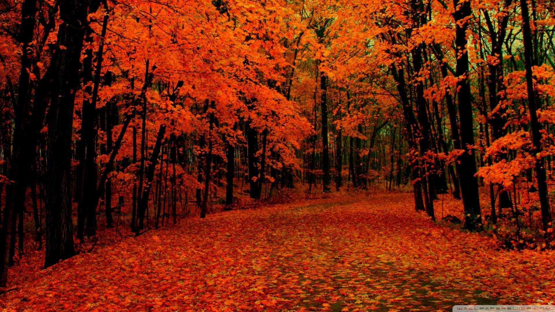Wallpaper: Fall Path Wallpaper 1080p HD. Upload at February 2, 2014 by .