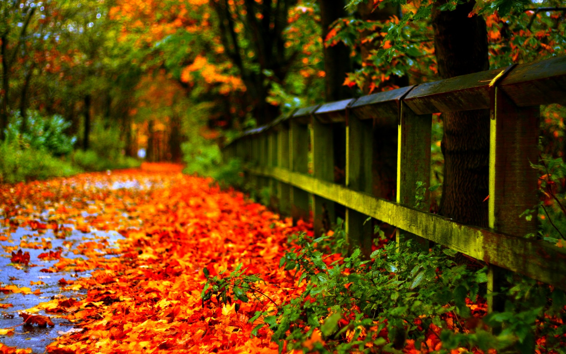 Fall Leaves Wallpapers Fall Foliage Background HD.