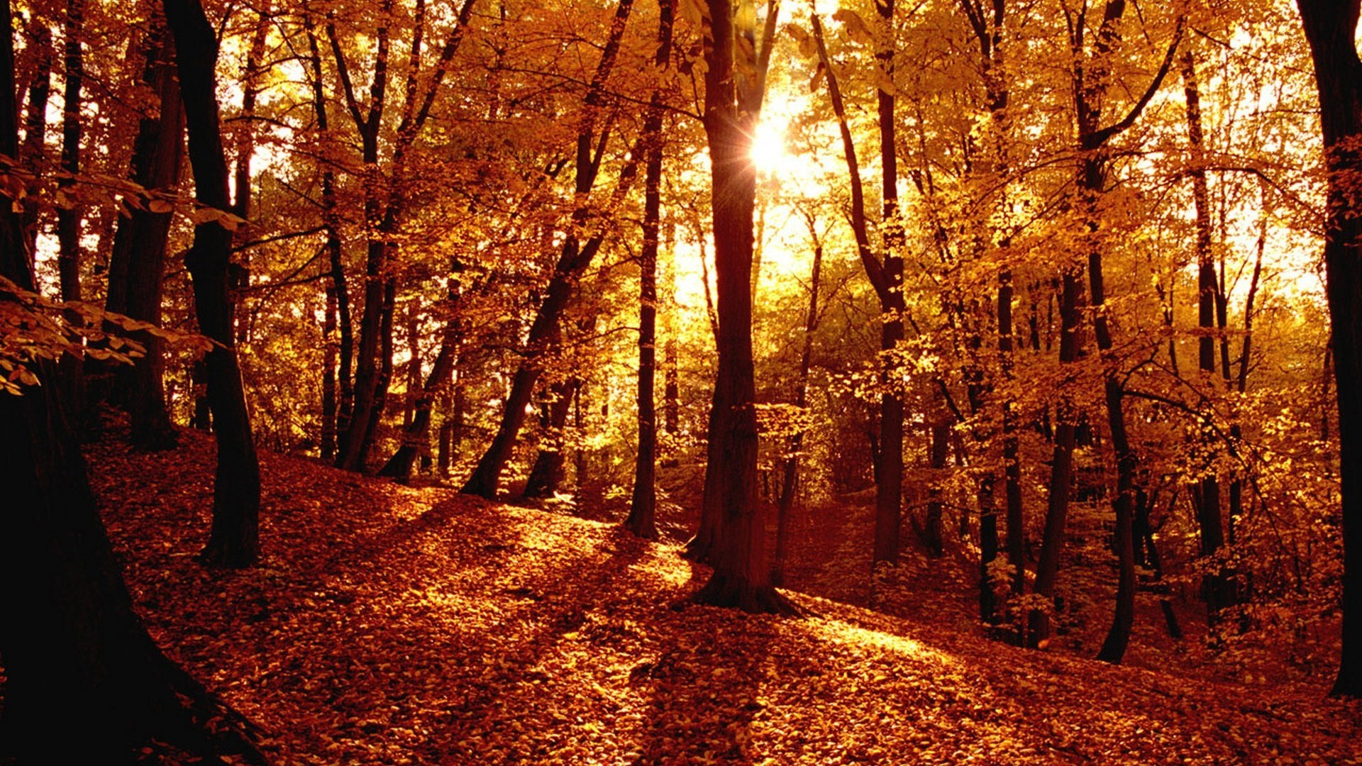 Autumn Forest Full HD Wallpaper.