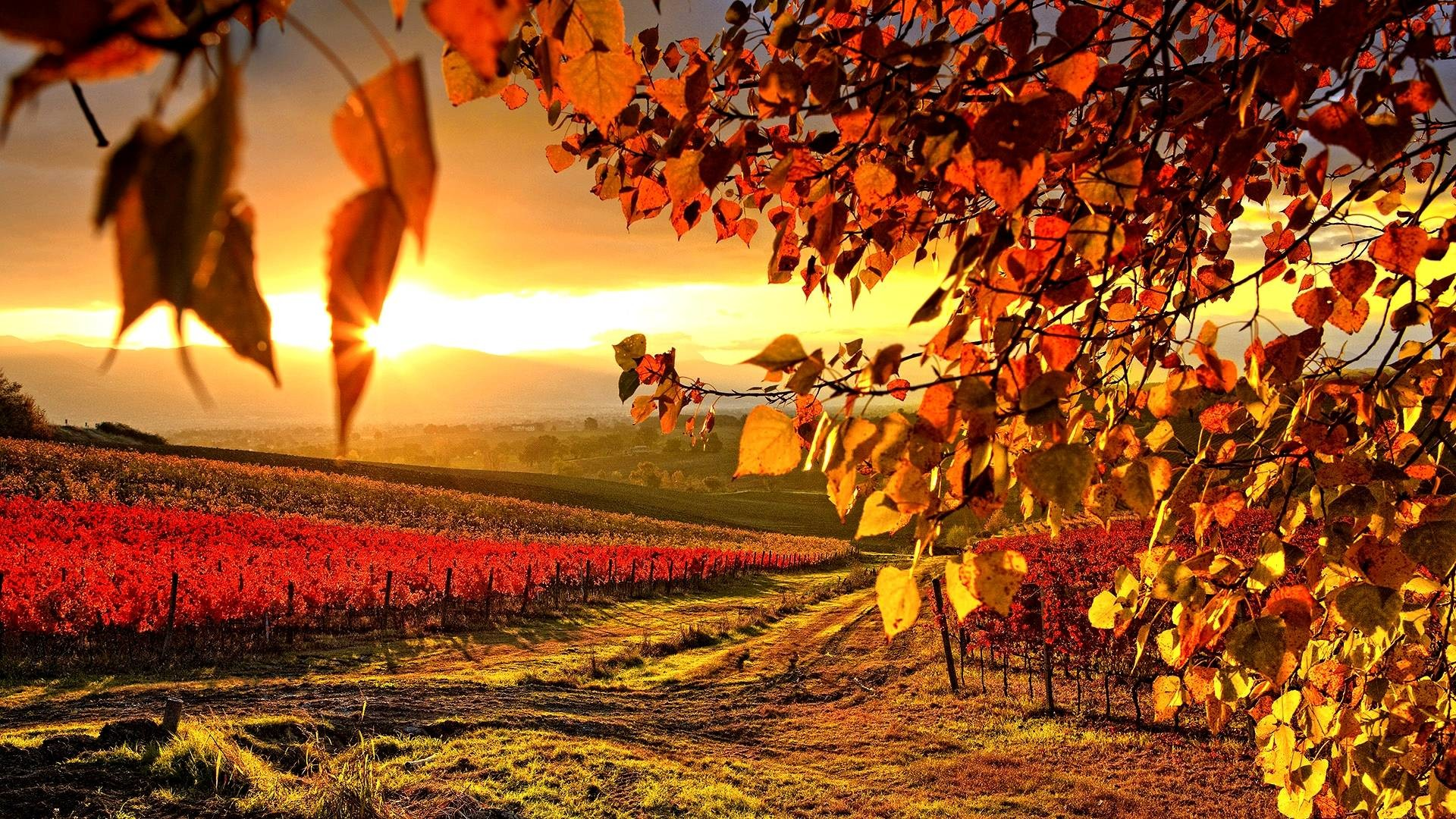 Wallpapers For > Italian Vineyard Wallpaper