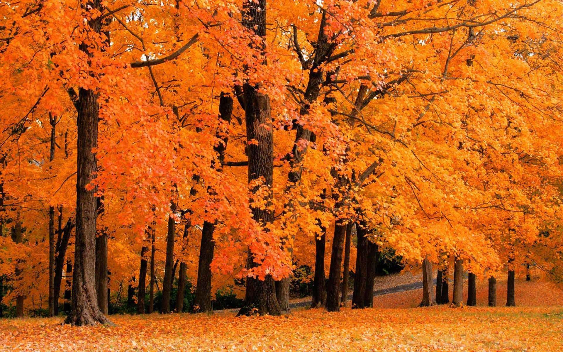 Fall Foliage Desktop Wallpaper #42312 Hd Wallpapers Background .