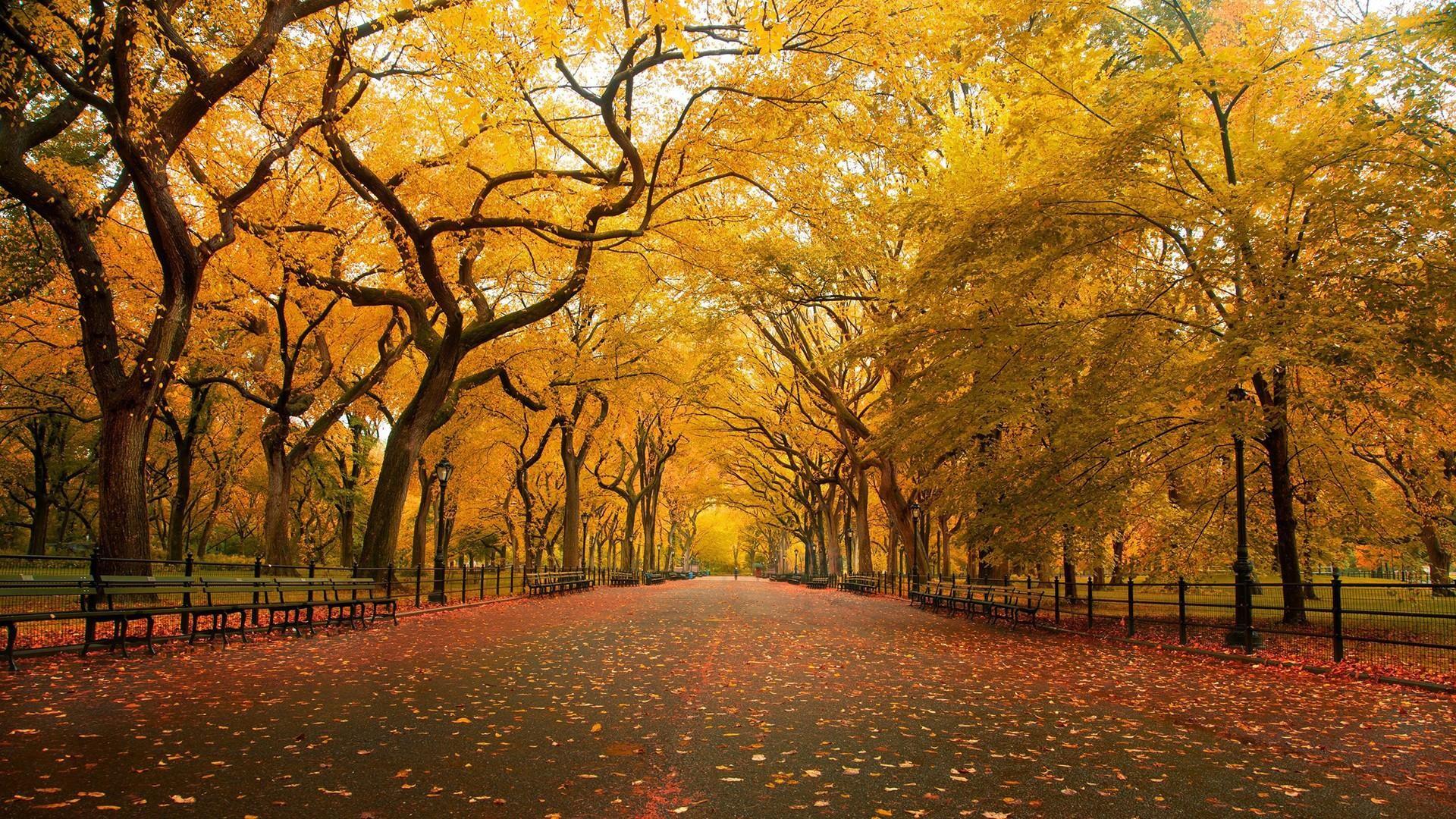 Yellow Orange Autumn Foliage HD Wide Wallpaper for Widescreen (50 Wallpapers)  – HD Wallpapers