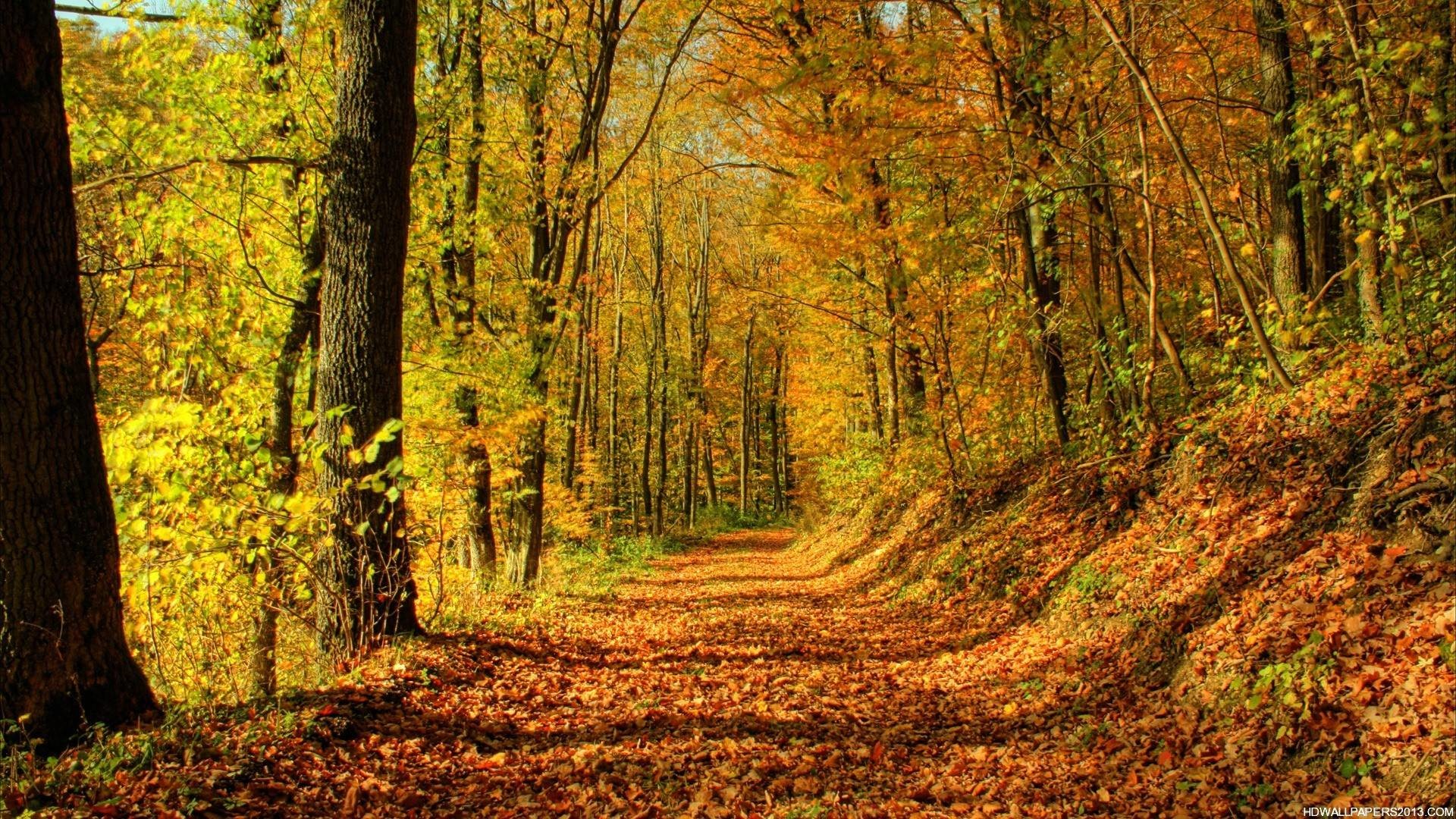 Fall Background Images Free – Wallpaper Cave