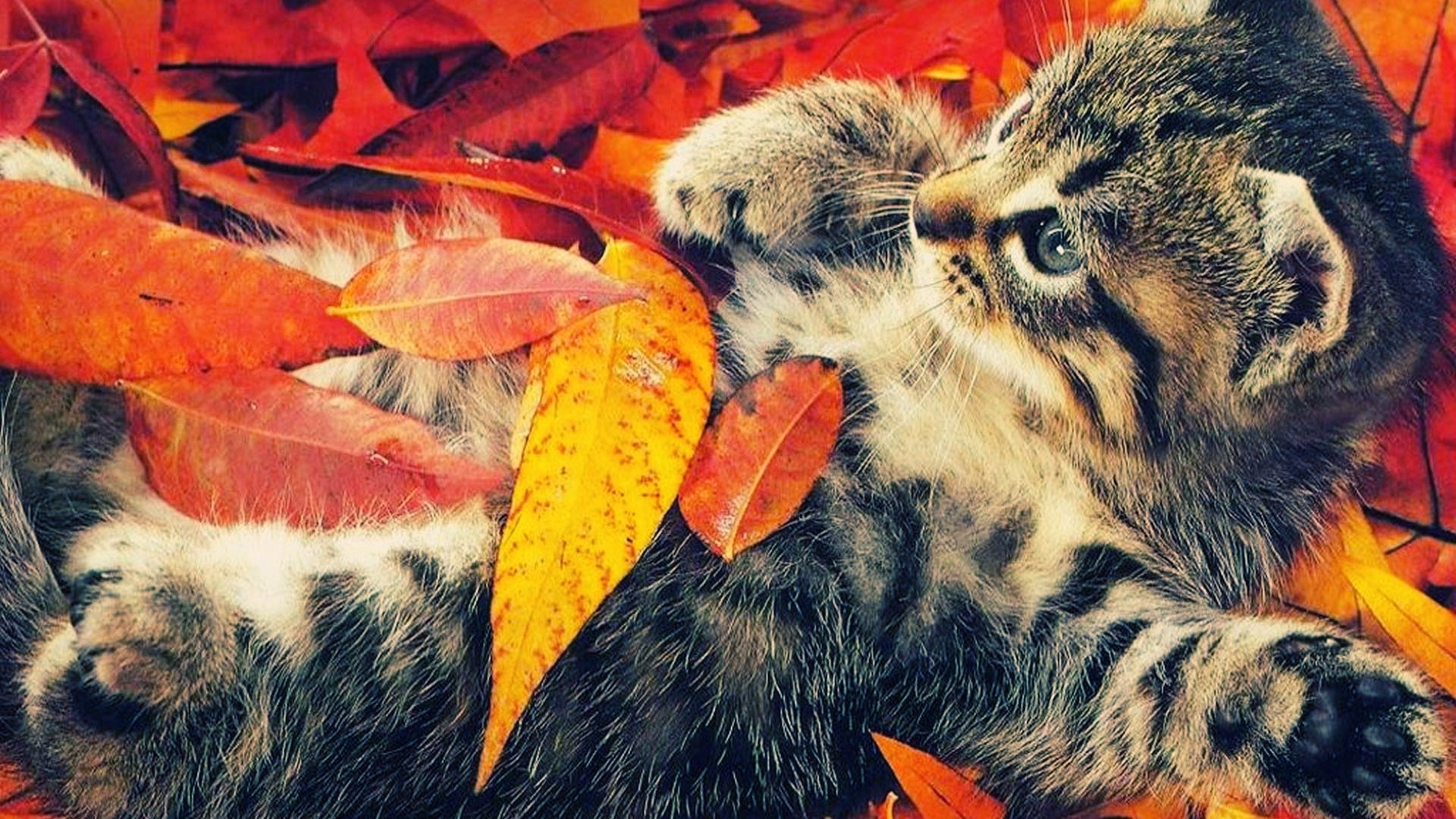 Fall Wallpapers High Definition As Wallpaper HD