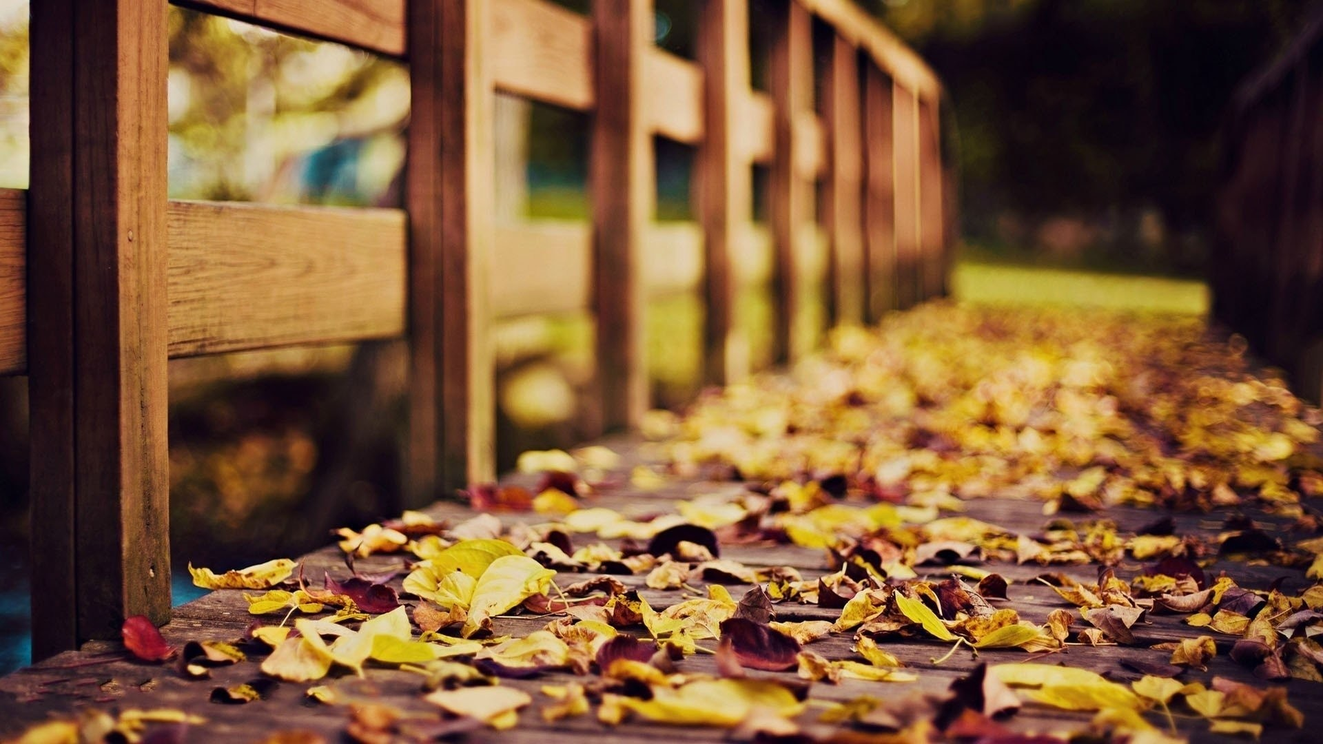 HD Wallpaper   Background ID:467723. Photography Fall