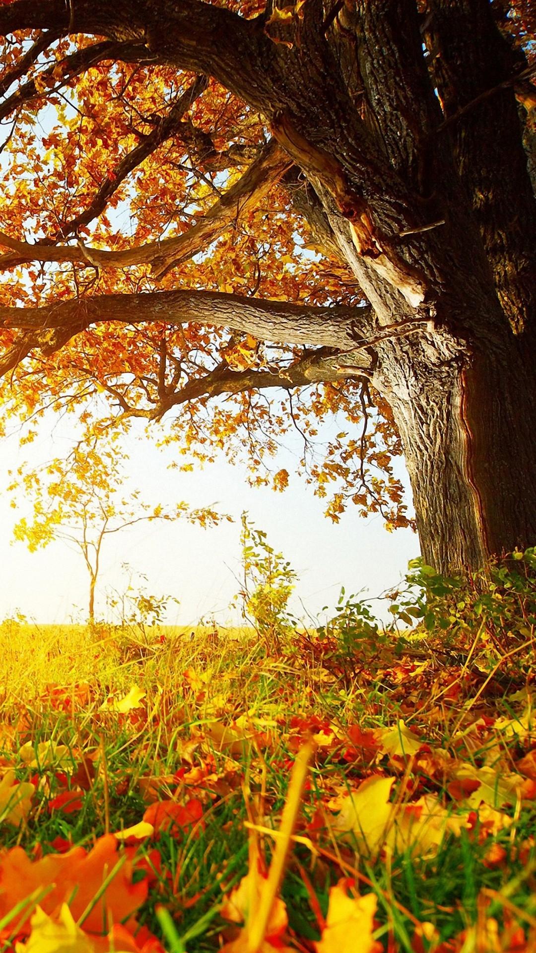 Fall Wallpaper HD Iphone