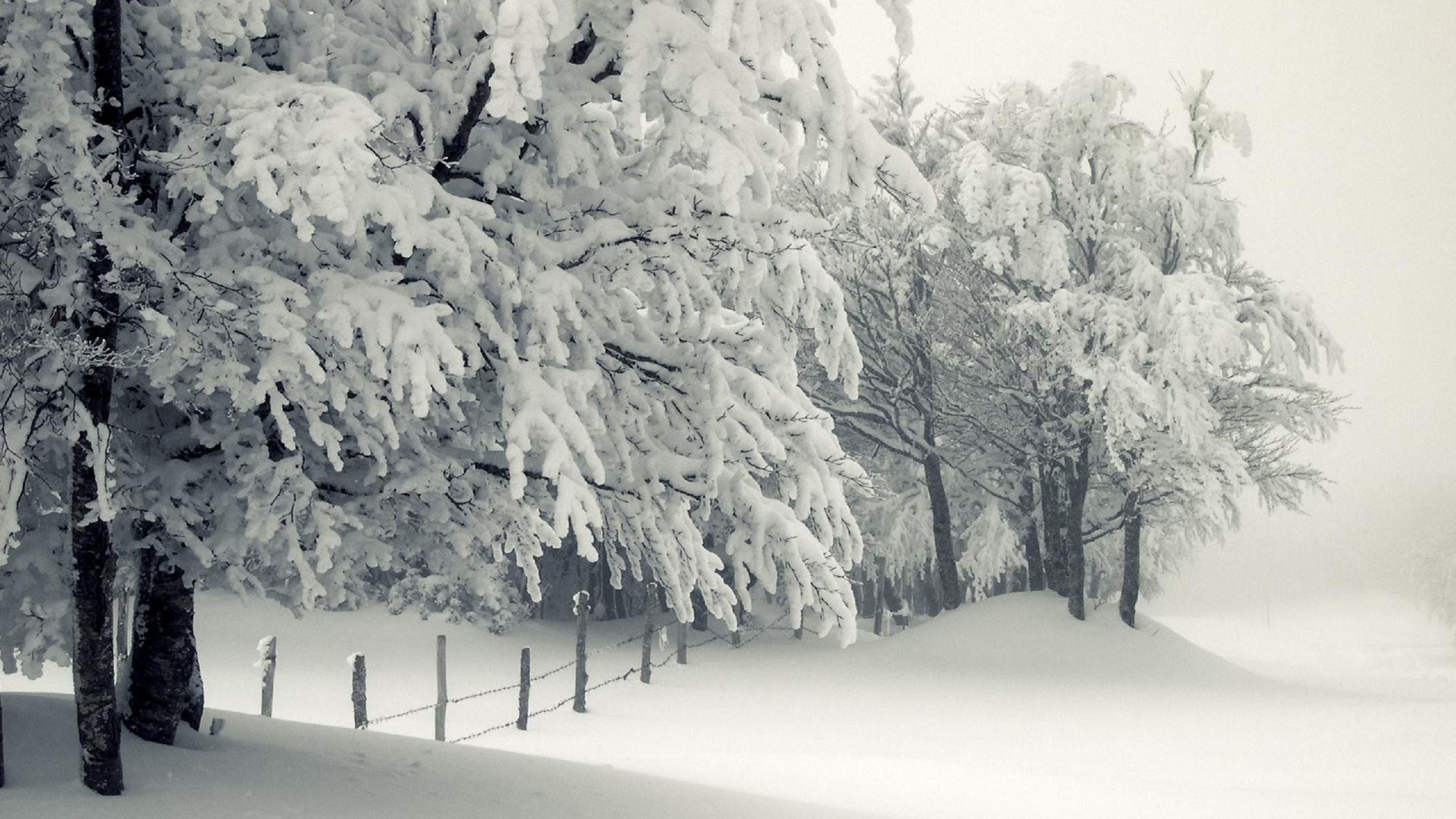 Winter Snow Trees Wallpaper WallDevil 2560×1440