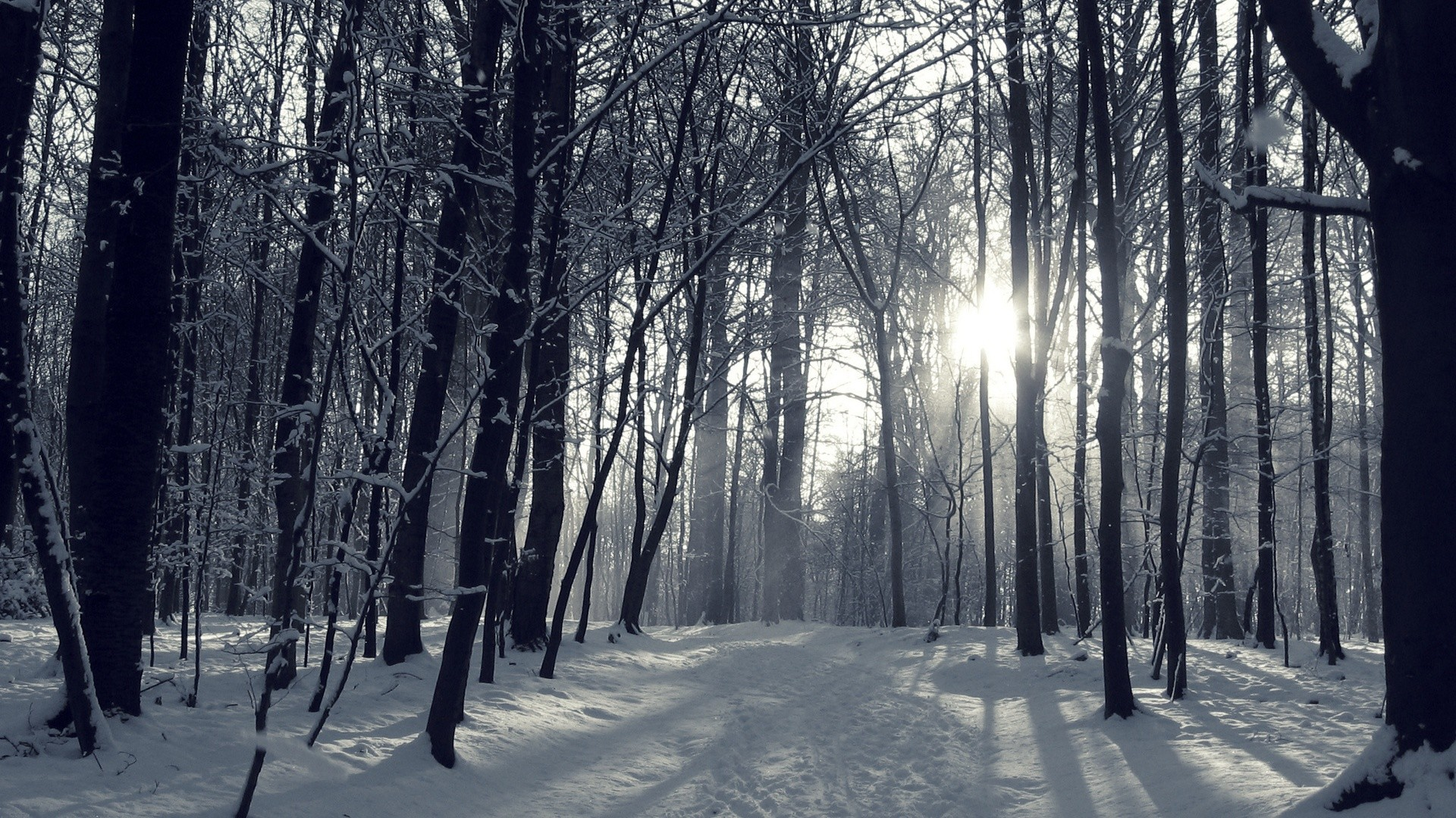 Snowy Winter Forest Wallpapers – – 1064989