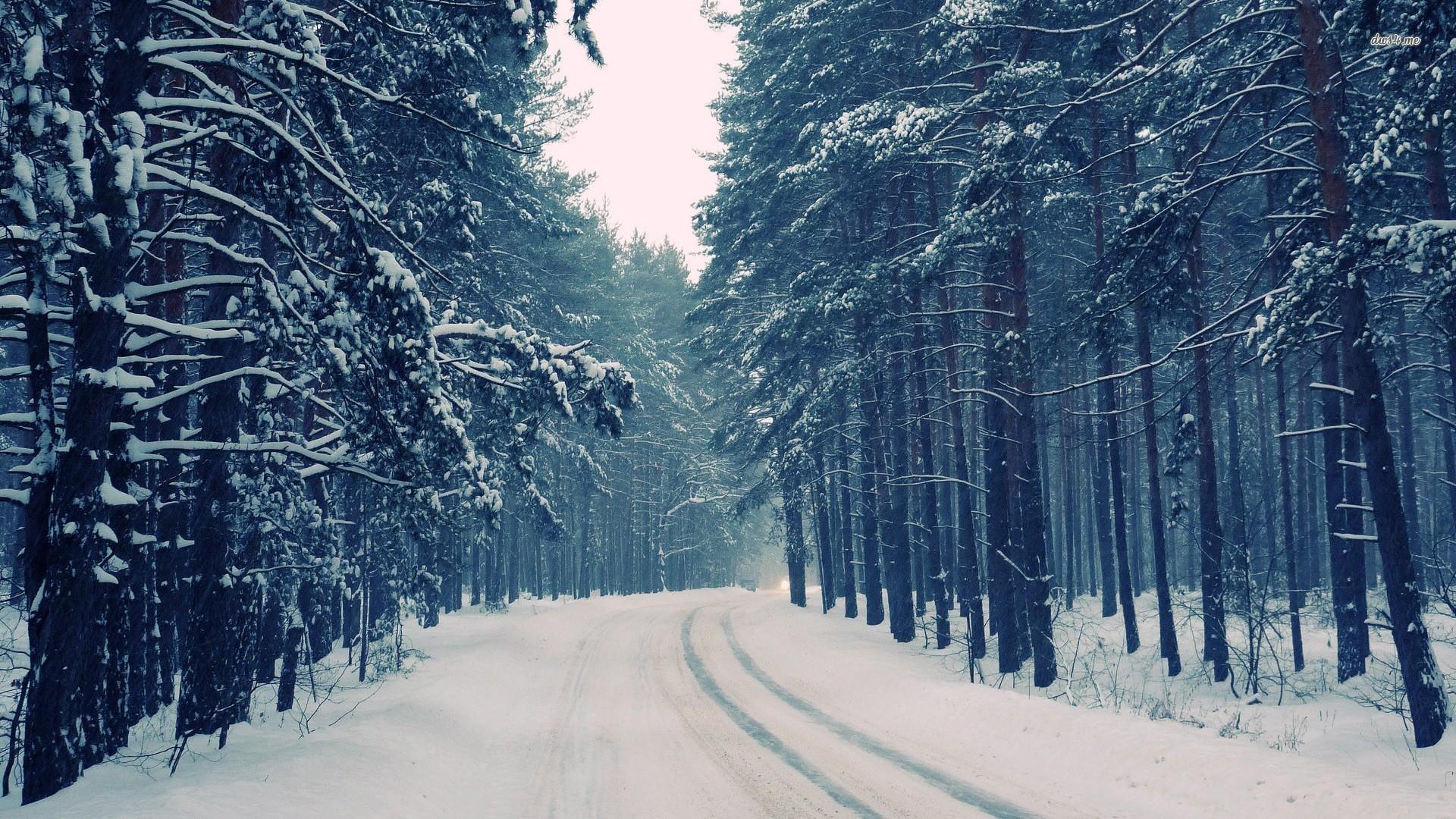 Snowy Forest Desktop Wallpaper