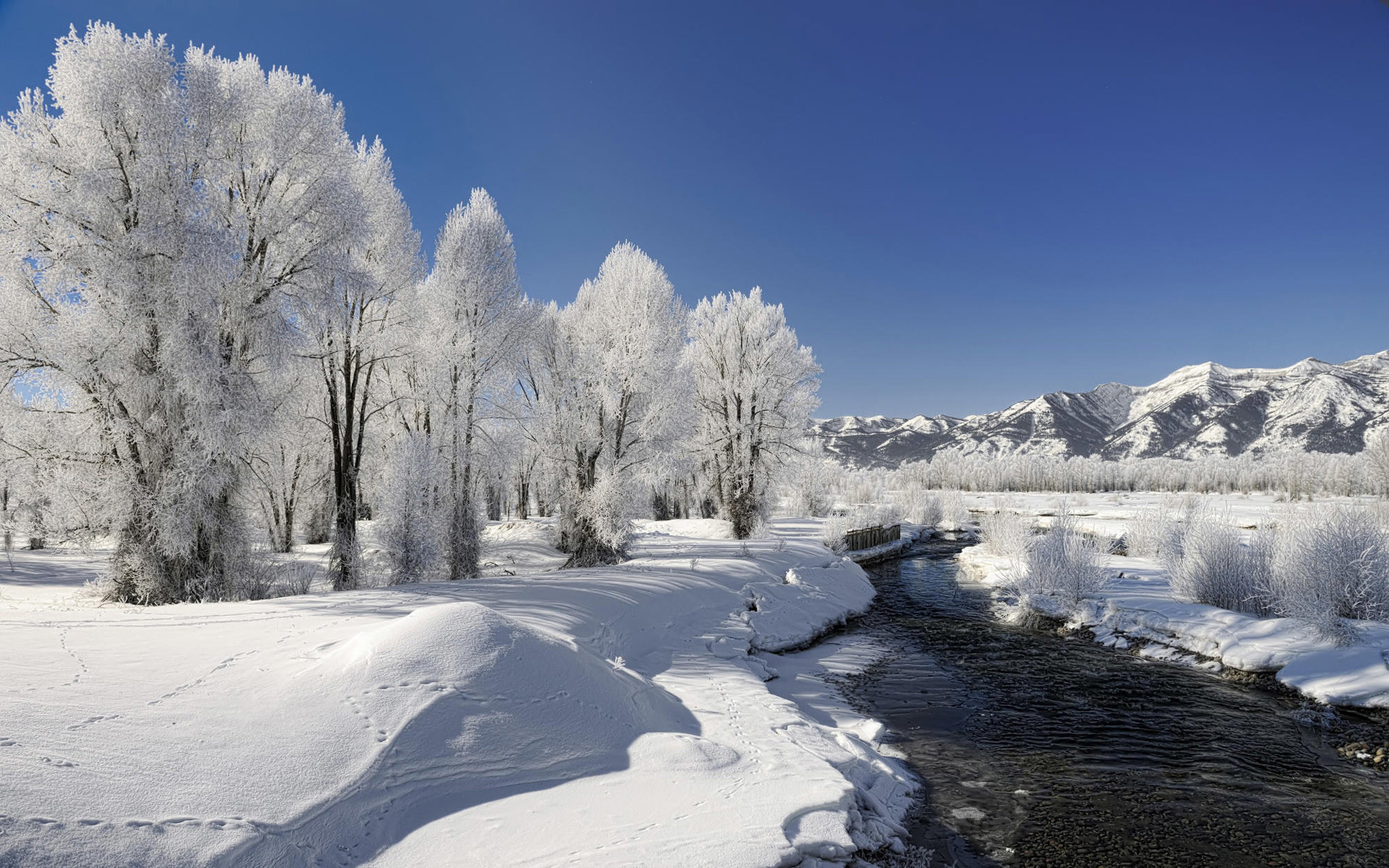 Winter Trees Creek Snowy Plant wallpapers and stock photos