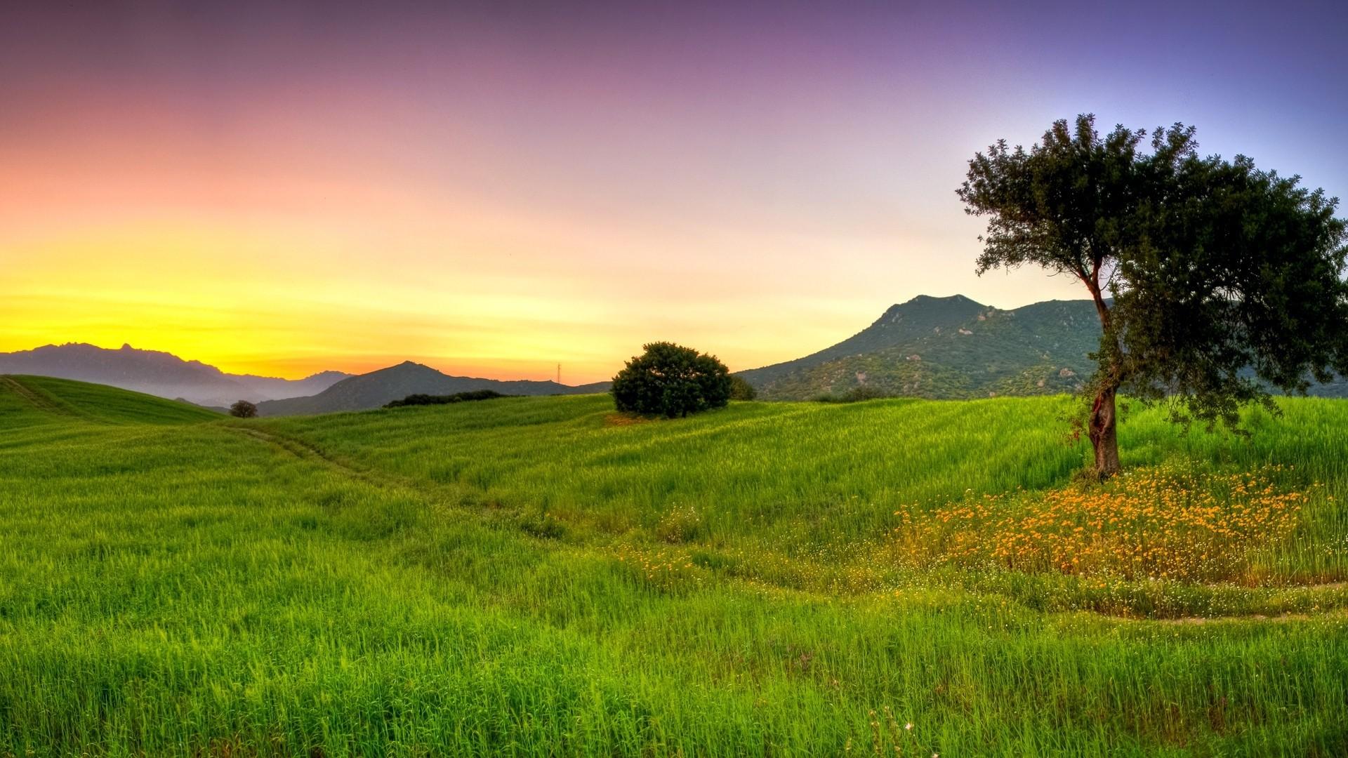 Preview wallpaper summer, nature, grass, beautiful, light 1920×1080