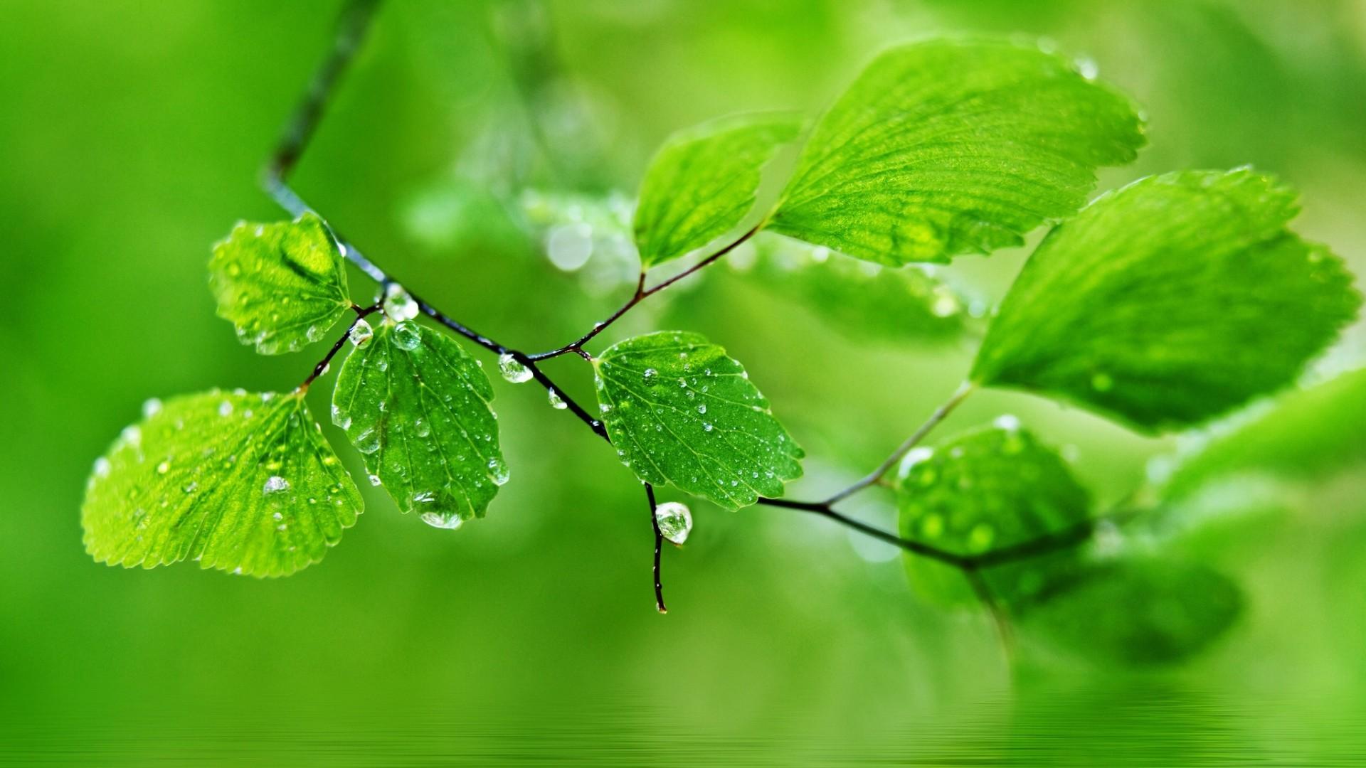Green Natureal Desktop Wallpapers. Green Natural …