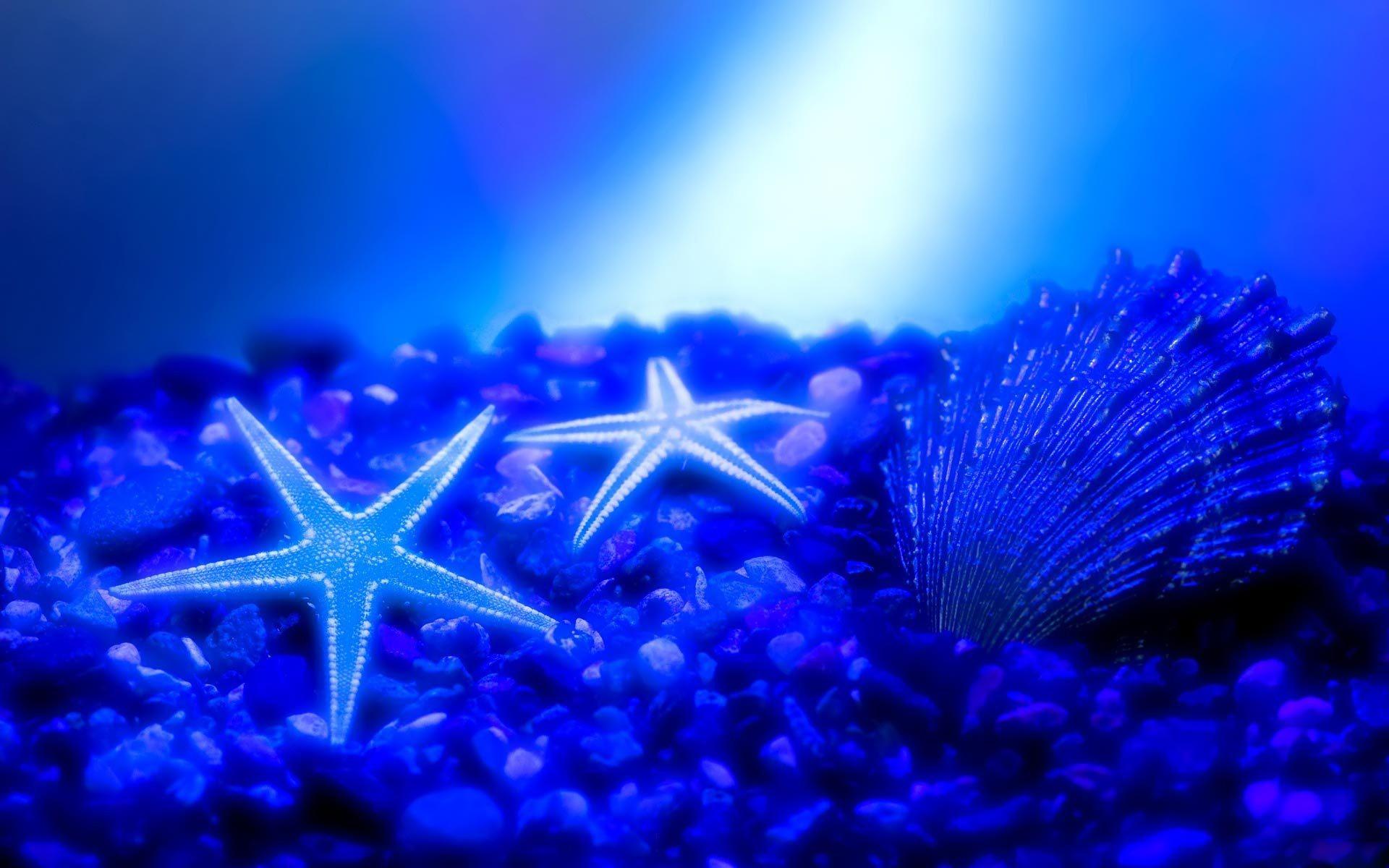 Seabed Nature Desktop Wallpaper Hd Electric Blue