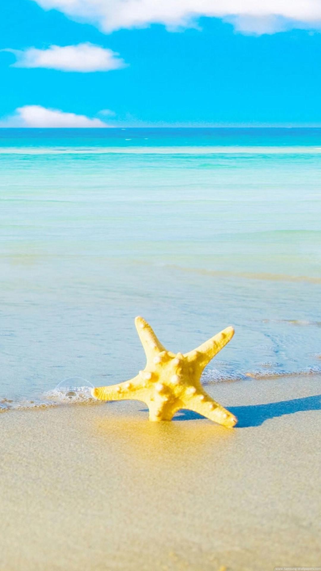 Starfish Beach iPhone 6 Plus HD Wallpaper …