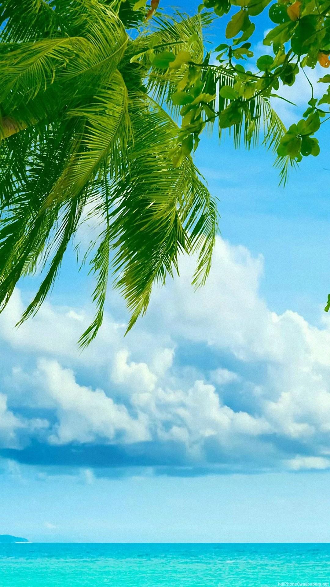 HD sea tree beach clouds tropical iphone 6 wallpaper