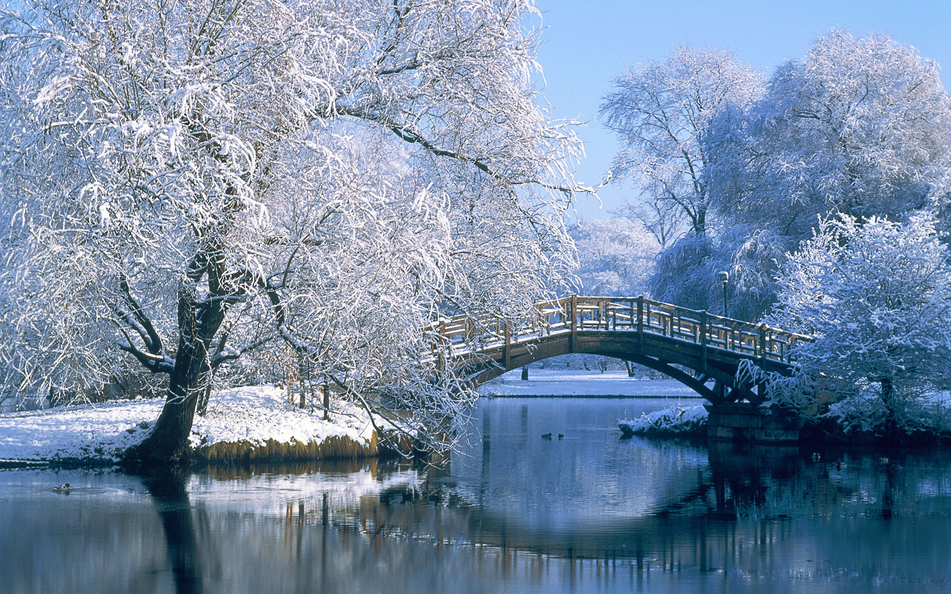 Winter Backgrounds 18561