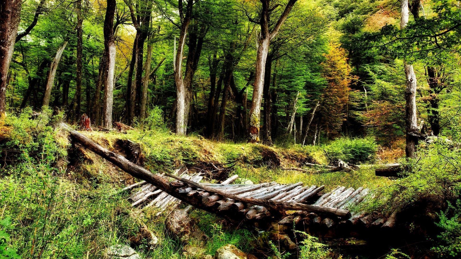 … Beautiful-Nature-Wallpaper-Desktop-Free-Download …
