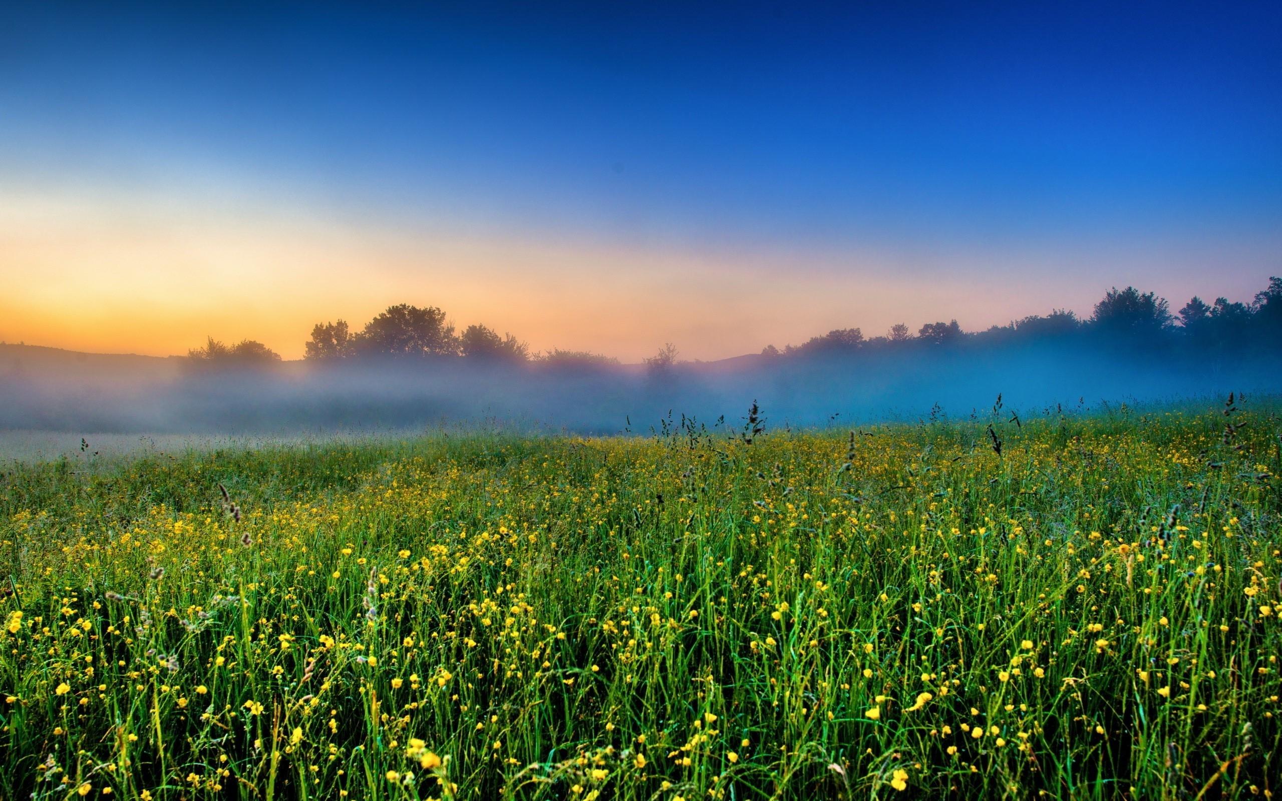 Foggy Field Farm Nice Nature Wallpaper