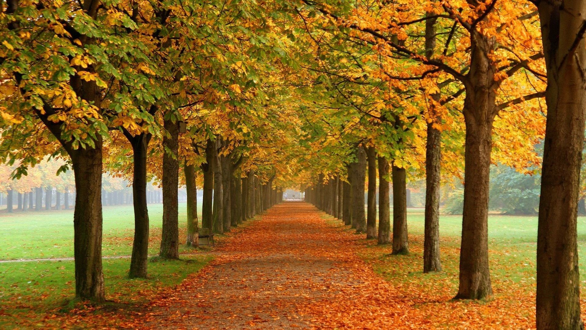 Trees Season Autumn Nice Nature Wallpapers For Mobile Detail