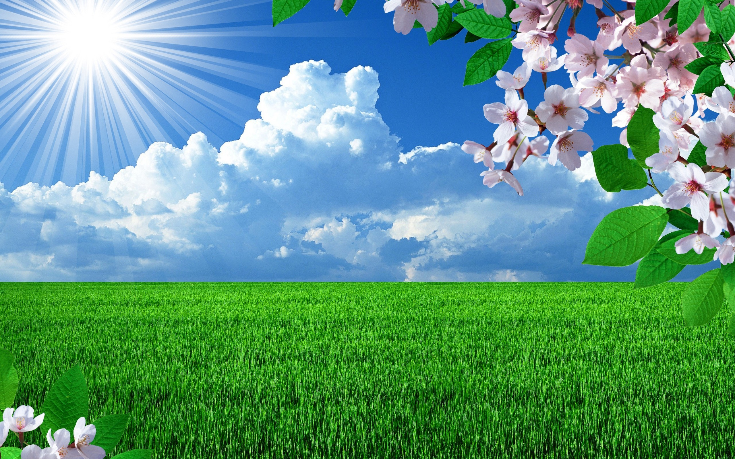 Beautiful Nature Wallpapers for your desktop