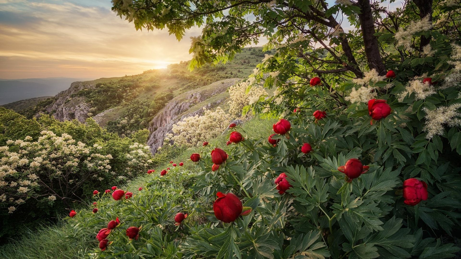 Spring Tag – Sunset Mountain Forest Bulgaria Spring Peony Hd Nature Images  For Android Phone for