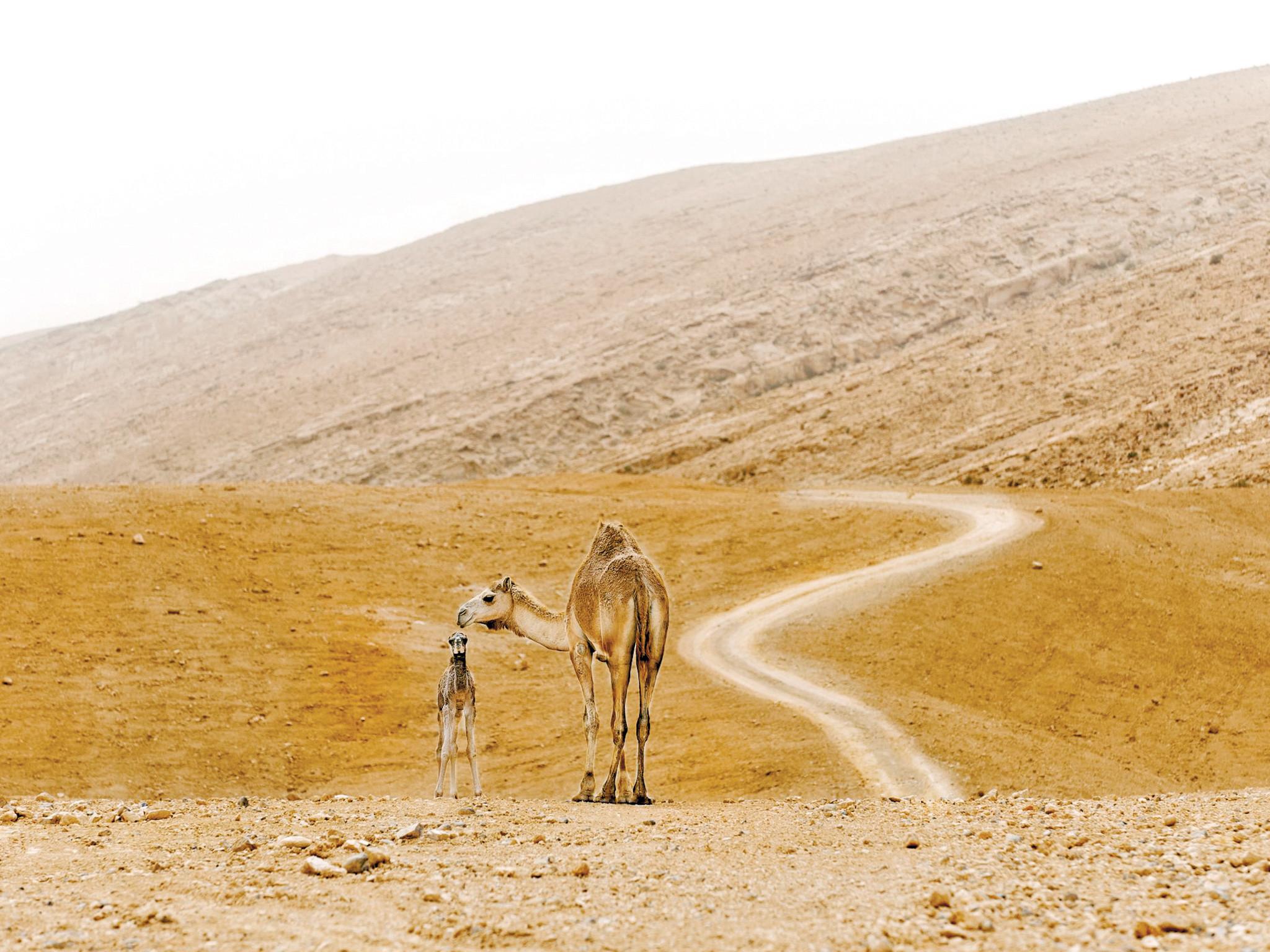 Israel Landscape 49625 | MOVDATA