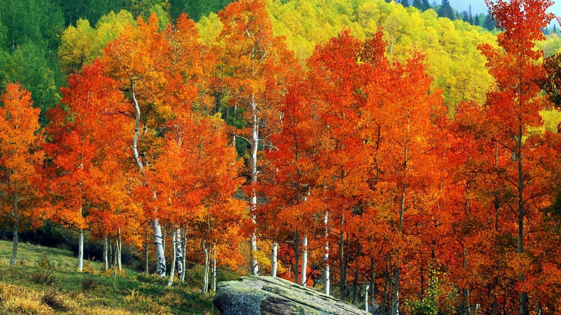 Other – Fall Mountains Trees Aspens Autumn Street Landscape Owl Pass  Colorado Colors Creek Desktop Background