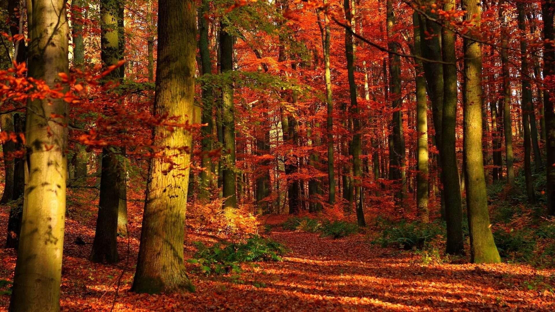 Autumn Wallpaper Widescreen
